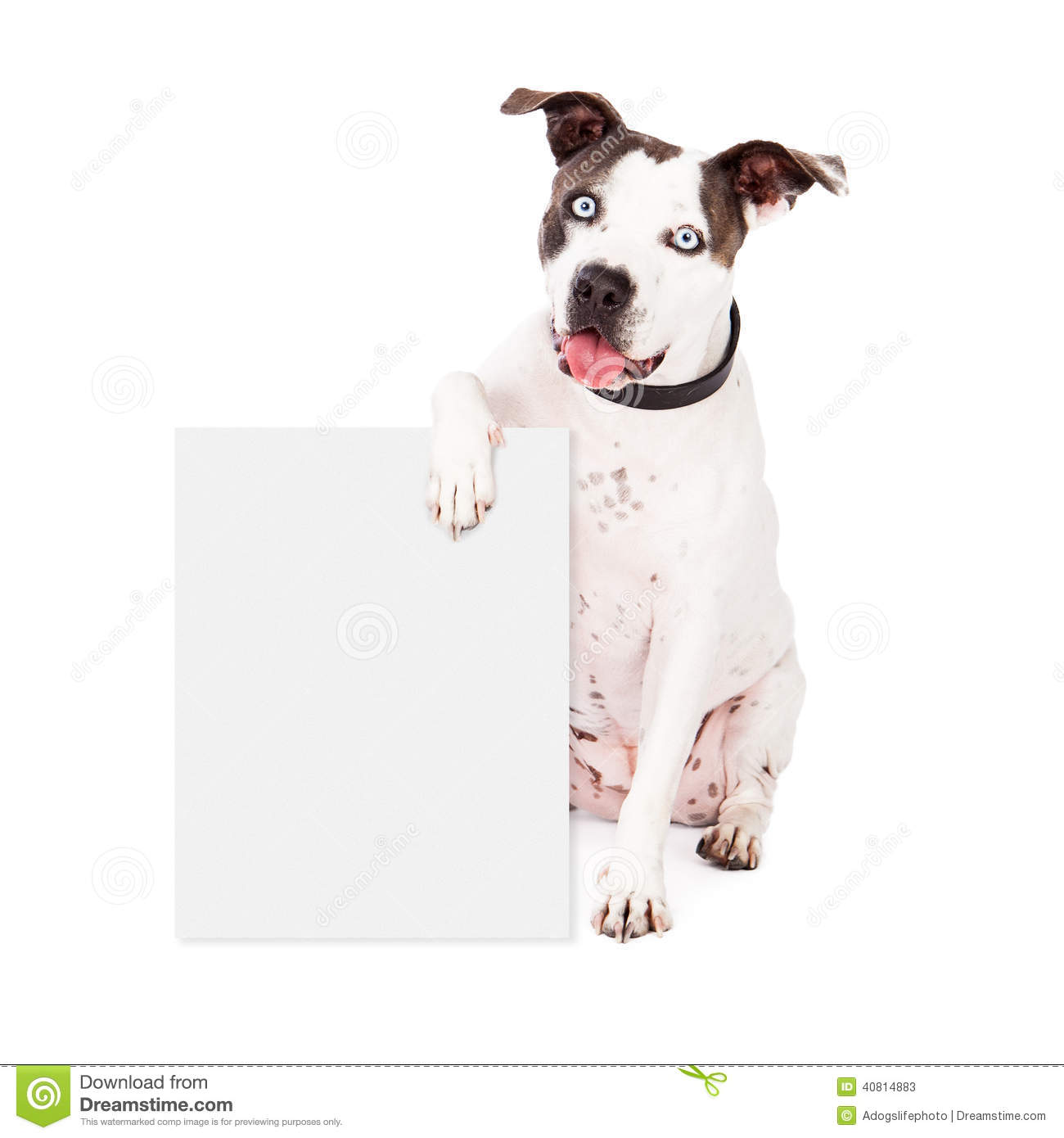 Pit Bull Holding Blank Sign Stock Photo - Image: 40814883