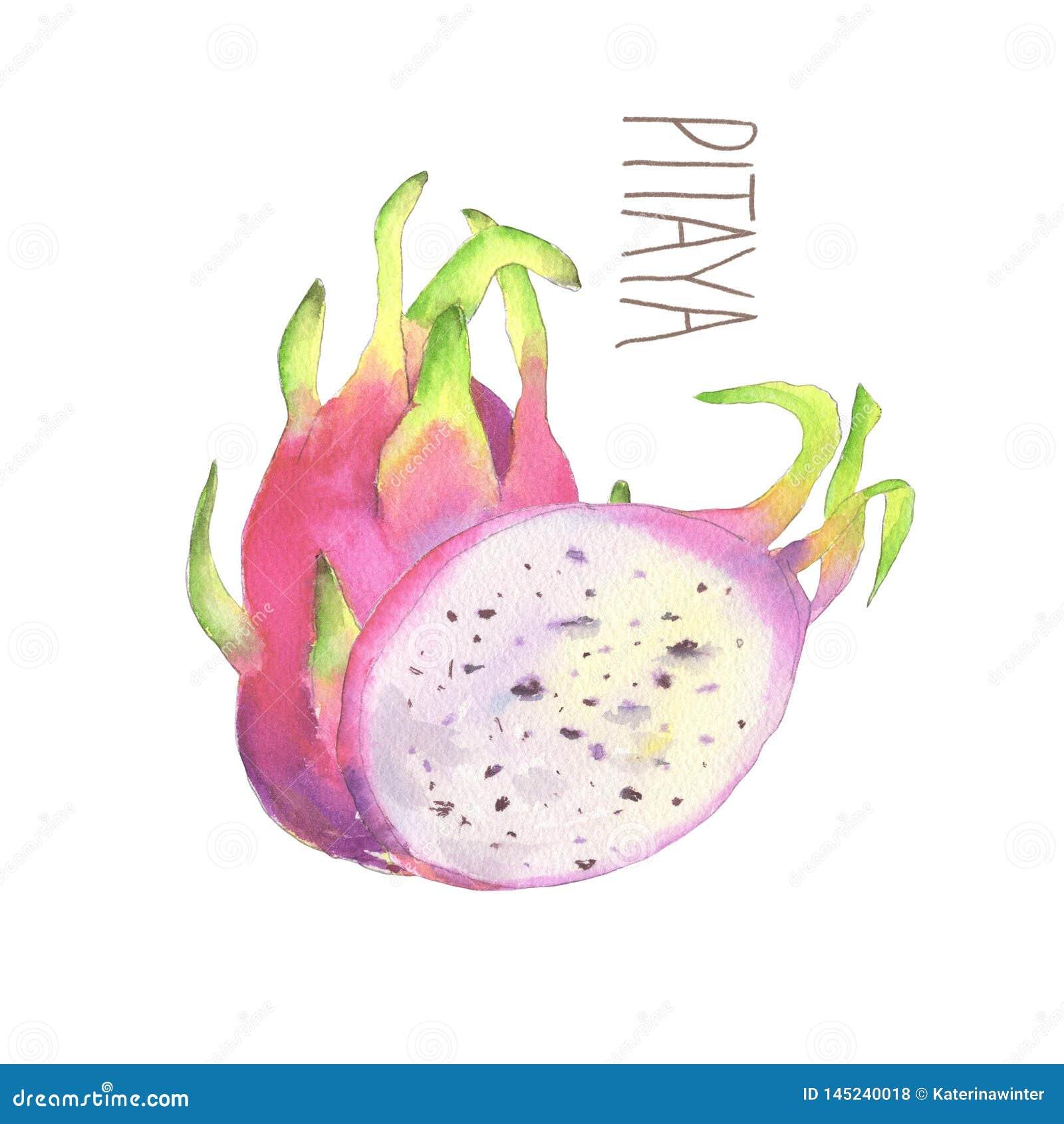 Pitaya do rosa da aquarela Corte do fruto do drag?o