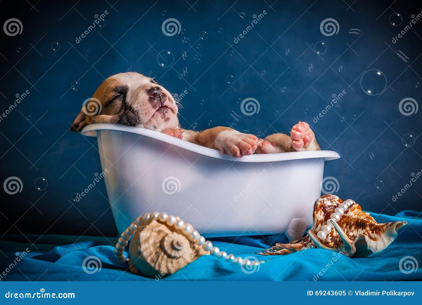 Pitbull sleeping in the bath