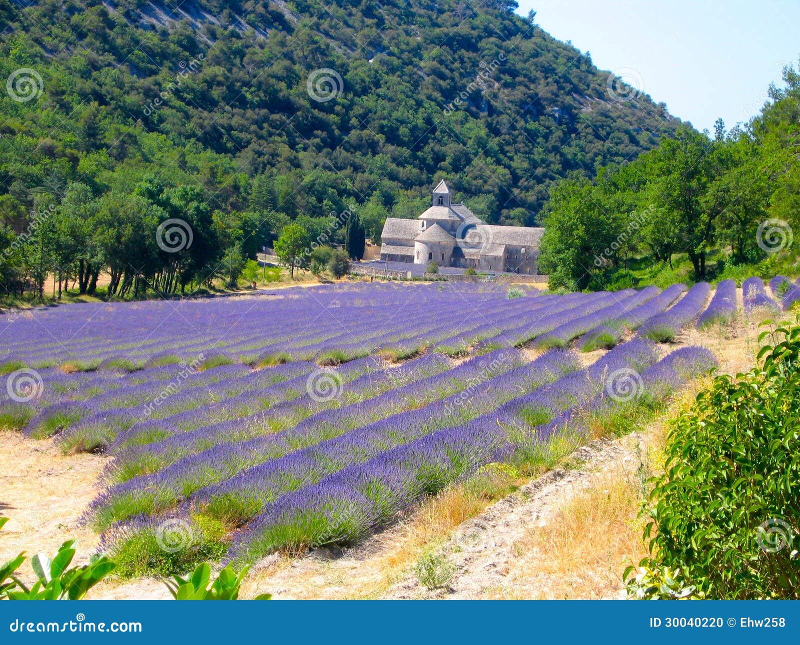 Lavendel sätter in och den gammala kyrkan