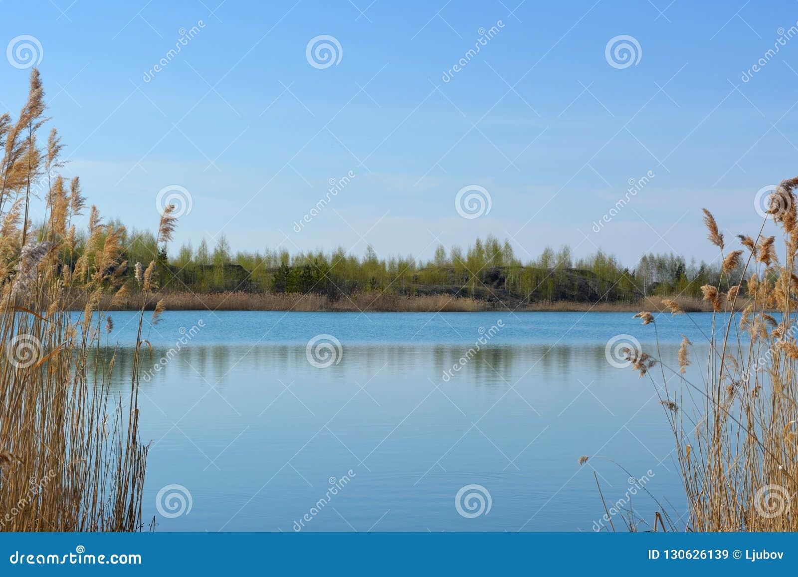Pittoreskt rysslandskap Sikt av sjön med klart blått vatten mellan busksnåren av torra vasser