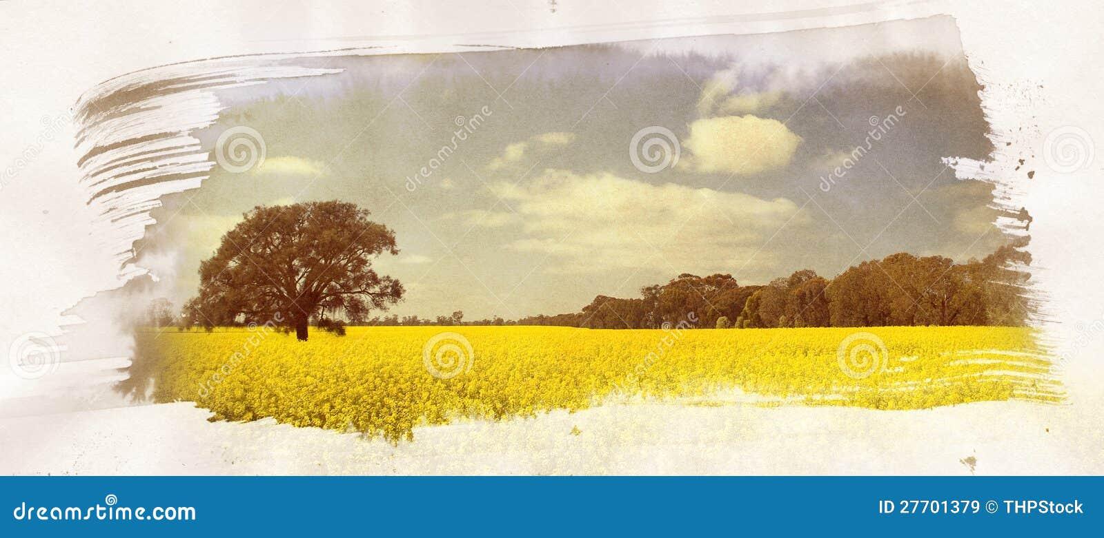 Pittura del campo di Canola
