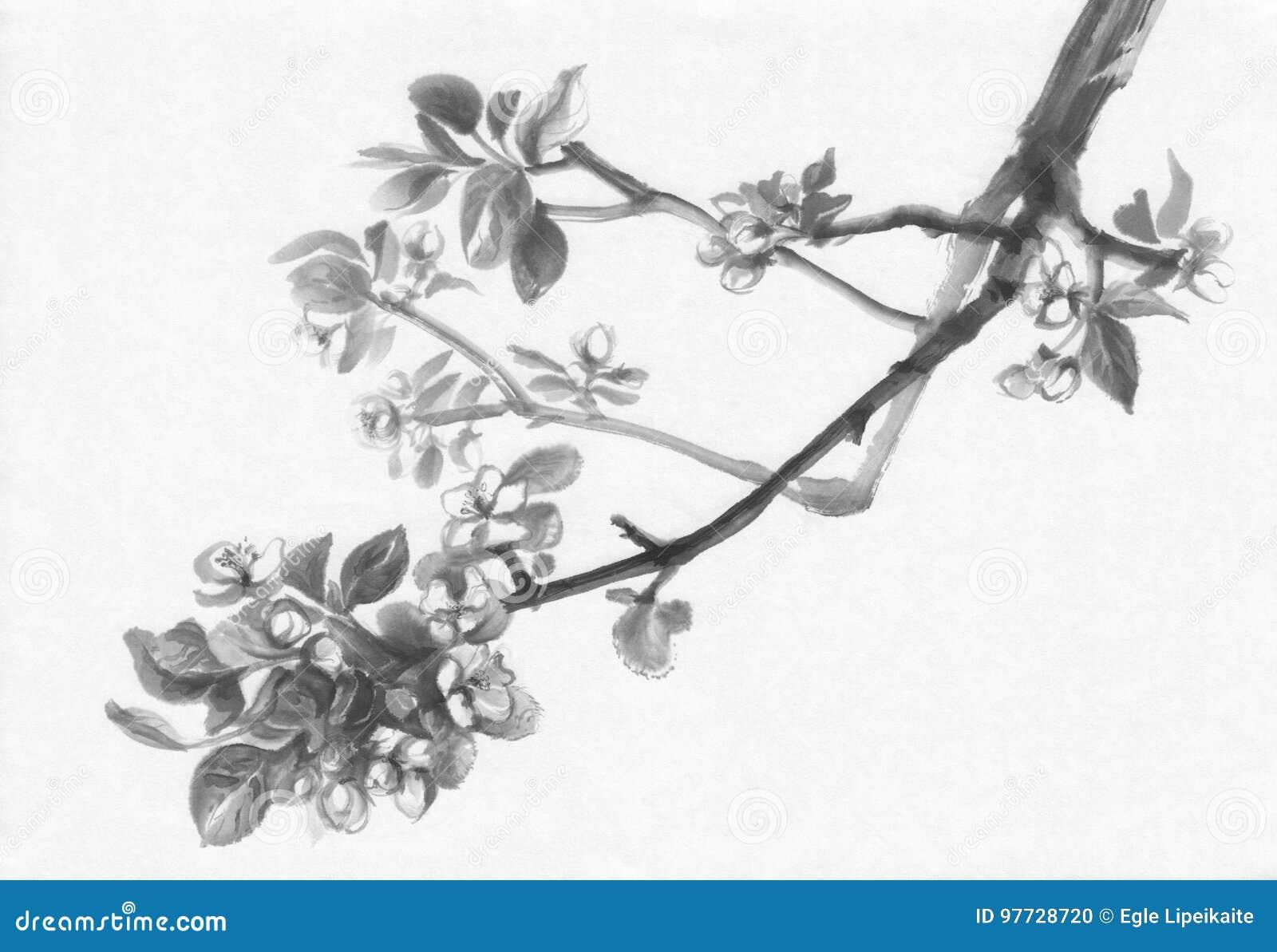 Pittura di fioritura dell inchiostro di melo
