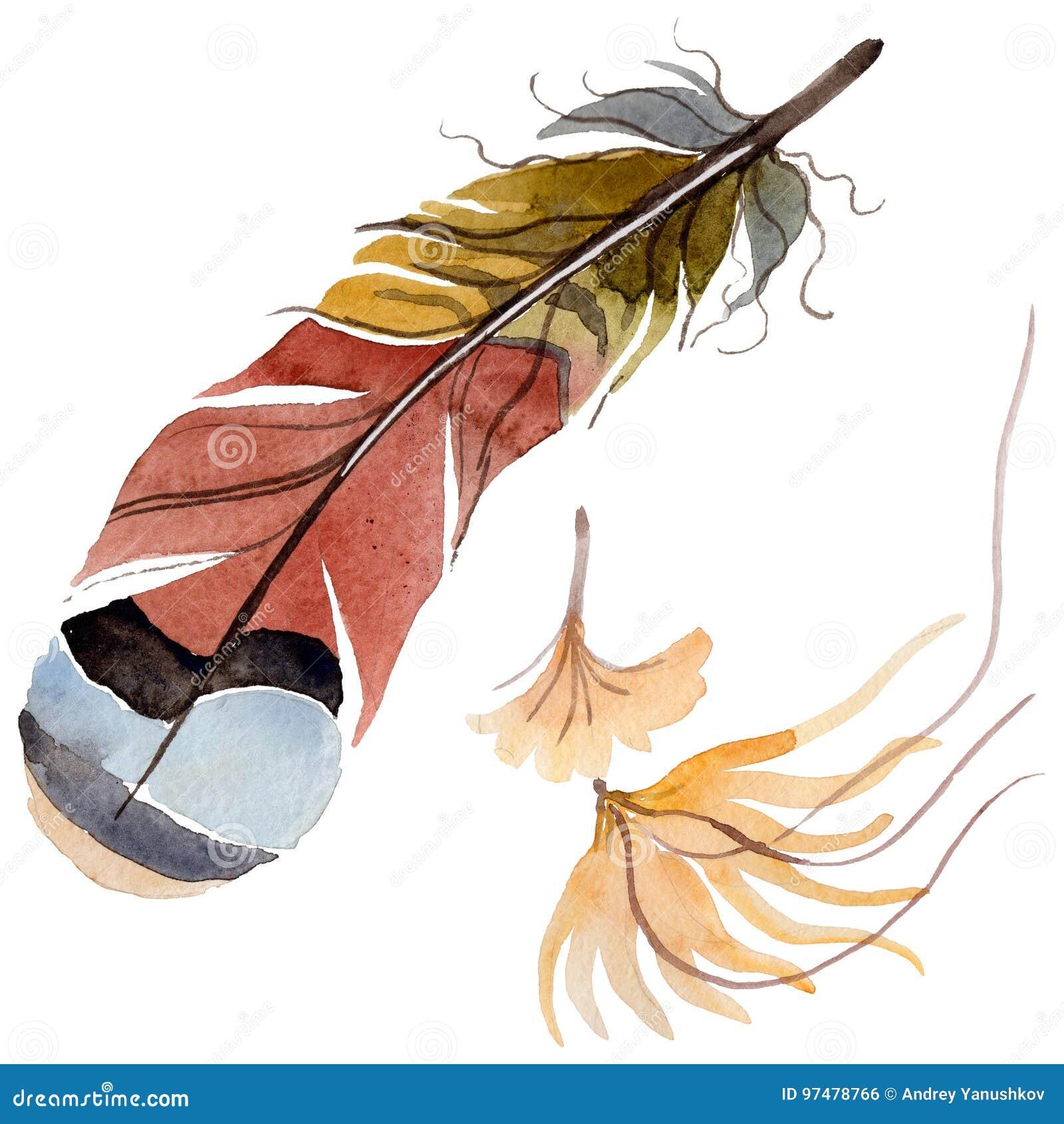 Piuma di uccello dell acquerello dall ala isolata
