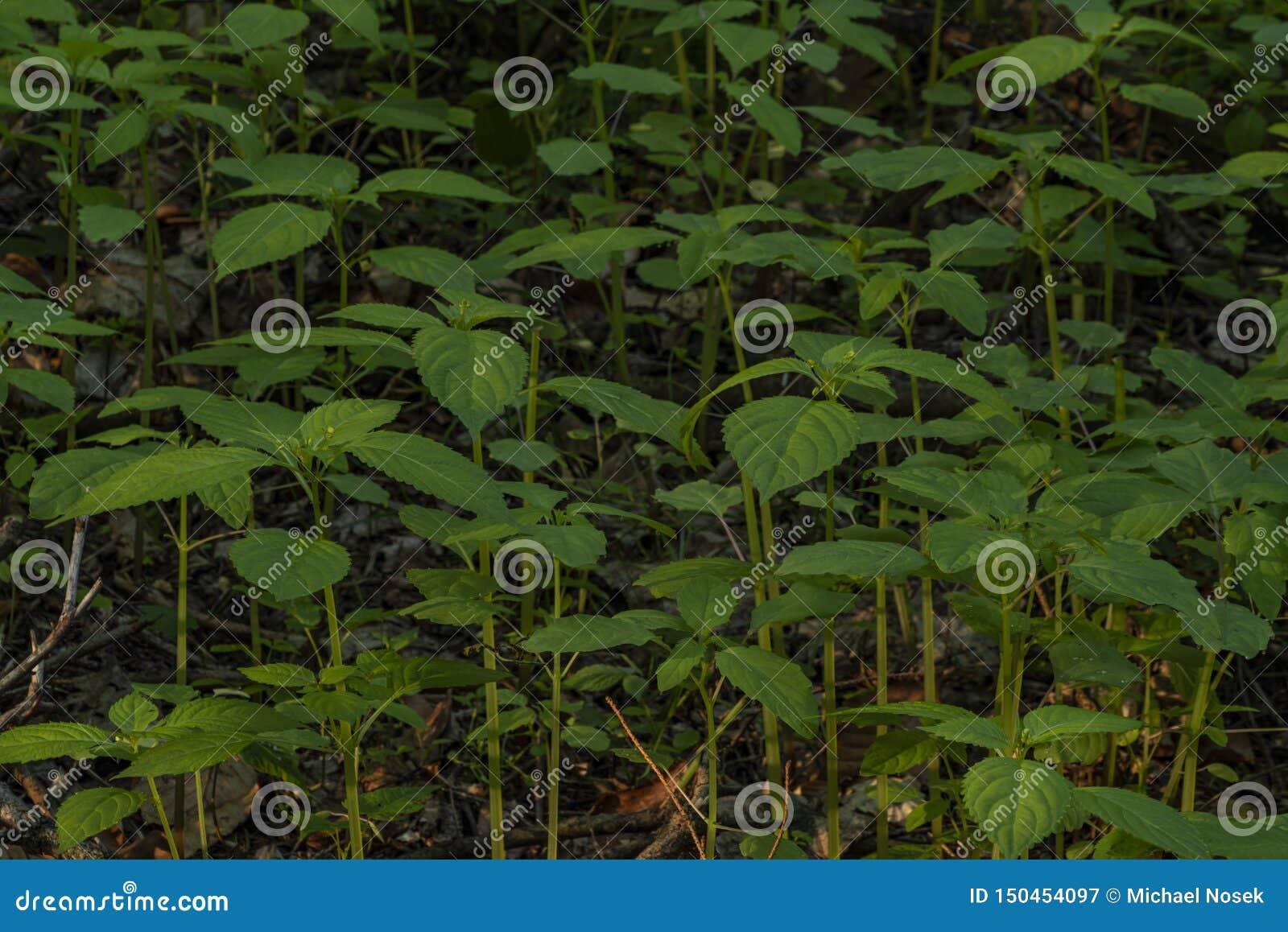 Plántulas frescas verdes en bosque oscuro de la primavera