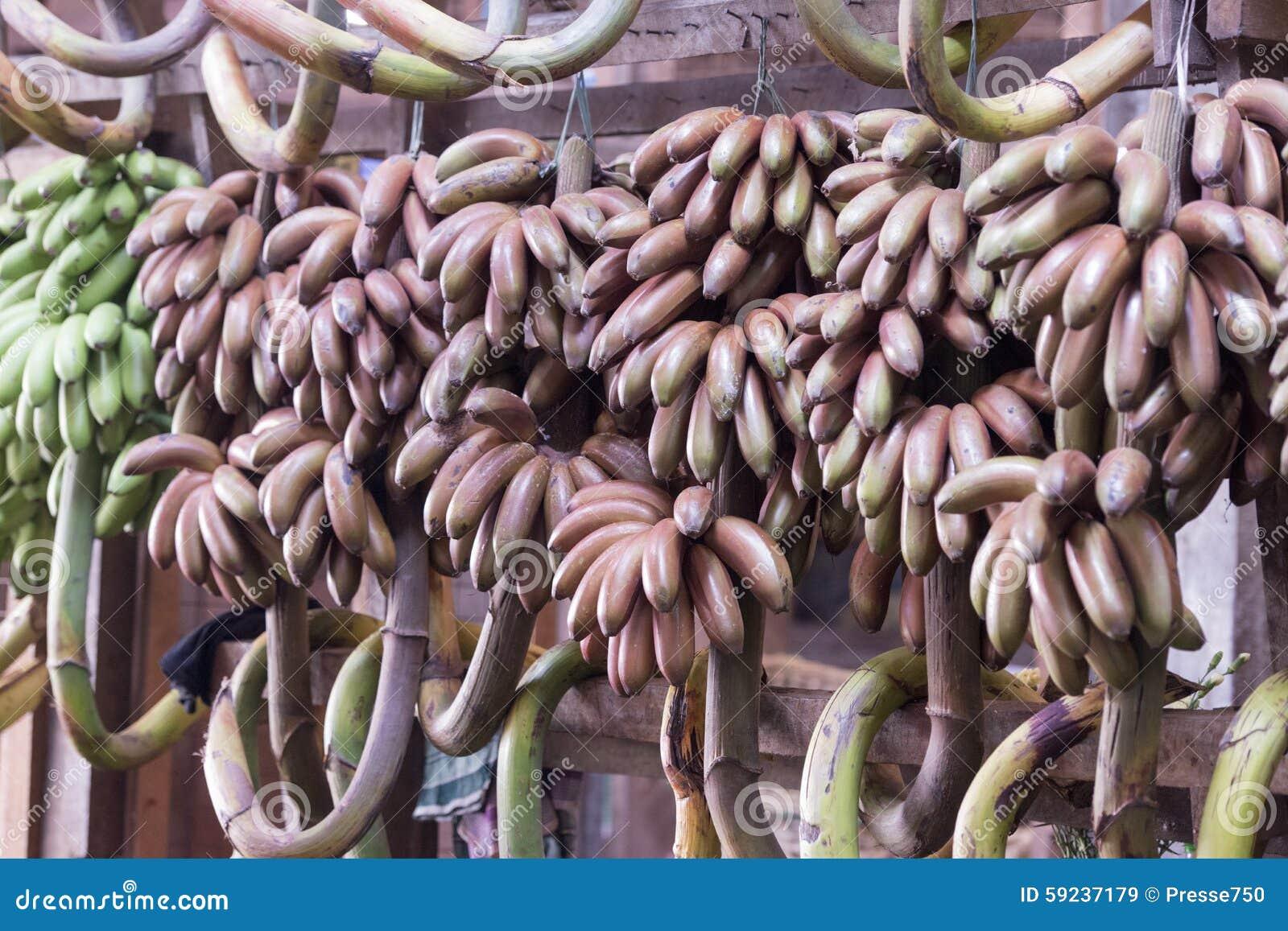 Download PLÁTANO DE LA FRUTA DE LA COMIDA DEL MERCADO DE ASIA MYANMAR RANGÚN Imagen de archivo - Imagen de plátano, yangon: 59237179