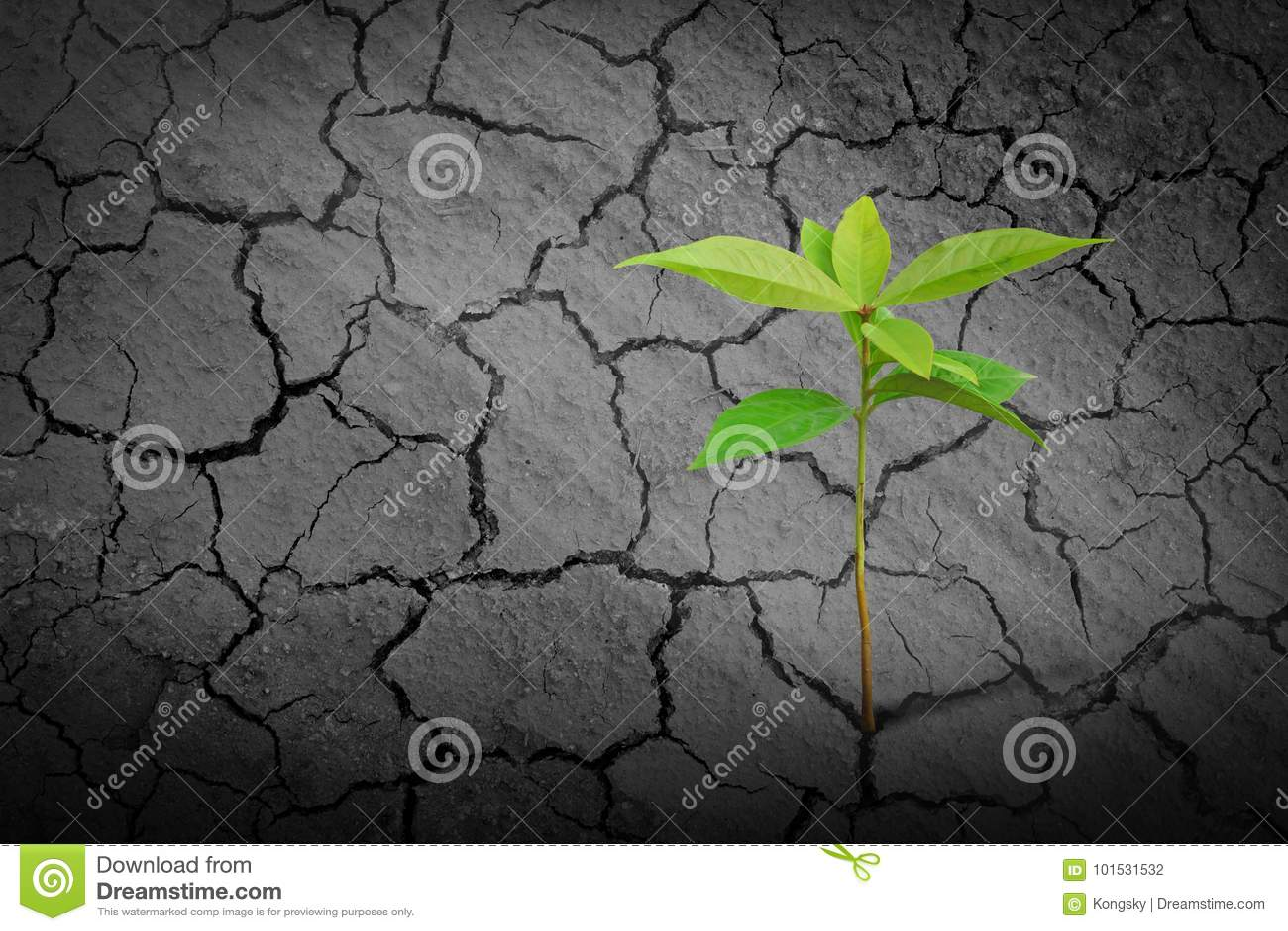 Plântula nova que cresce no solo seco da argila