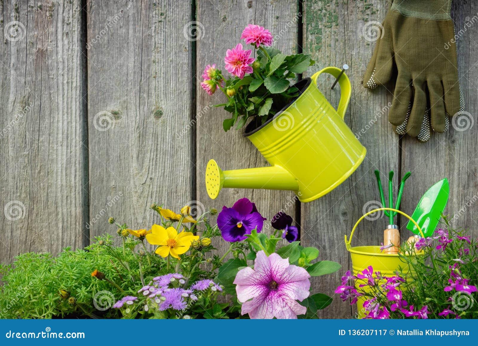 Plântulas de plantas e de flores de jardim em uns vasos de flores Equipamento de jardim: lata molhando, cubetas, pá, ancinho, luv