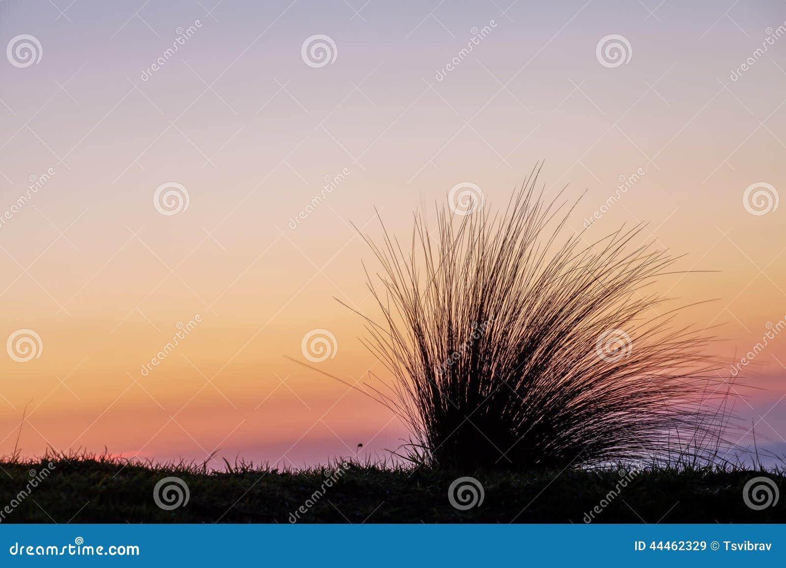 Plażowa trawy sylwetka przy zmierzchem