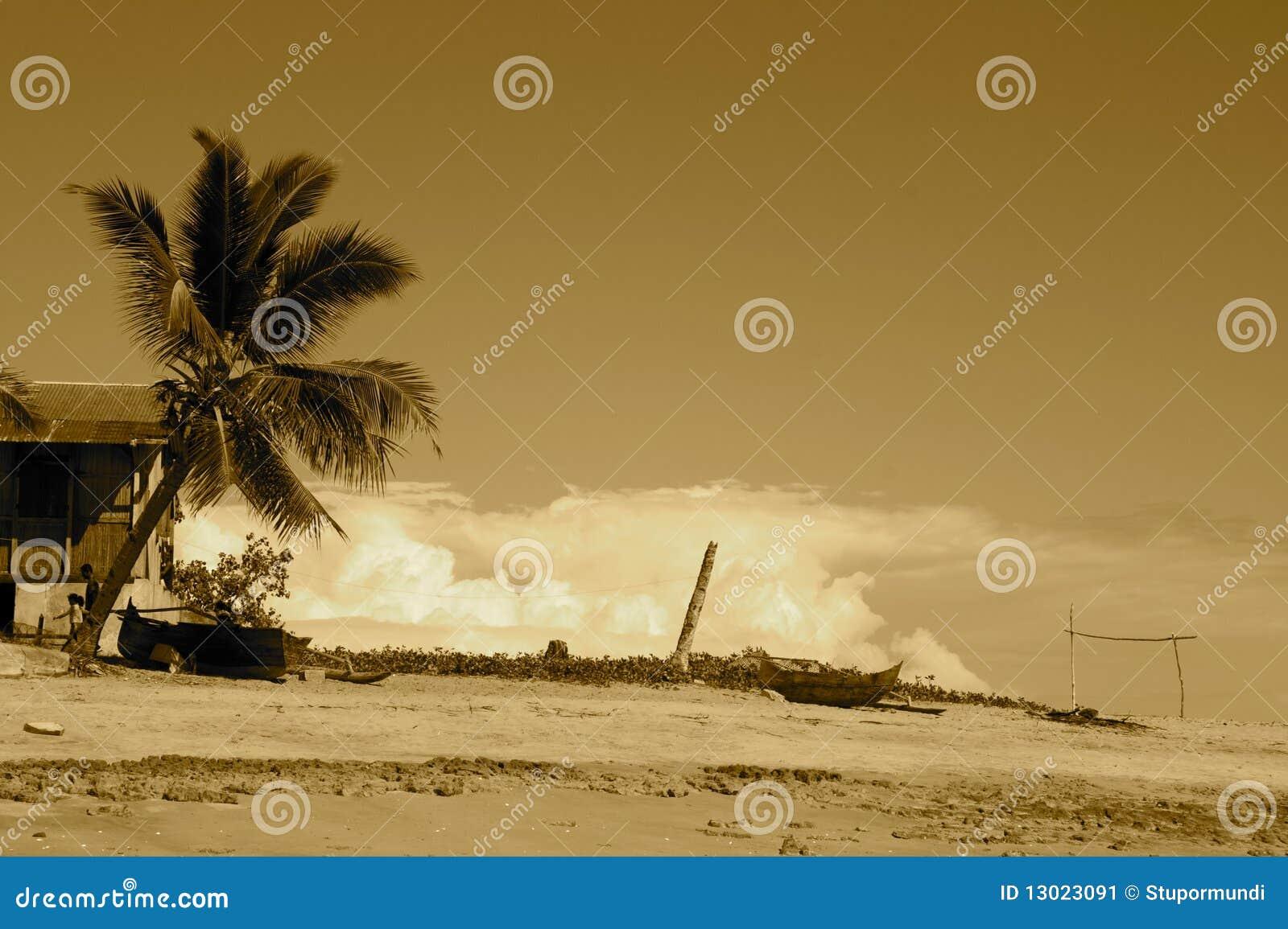 Plażowego komba nosaty sepia