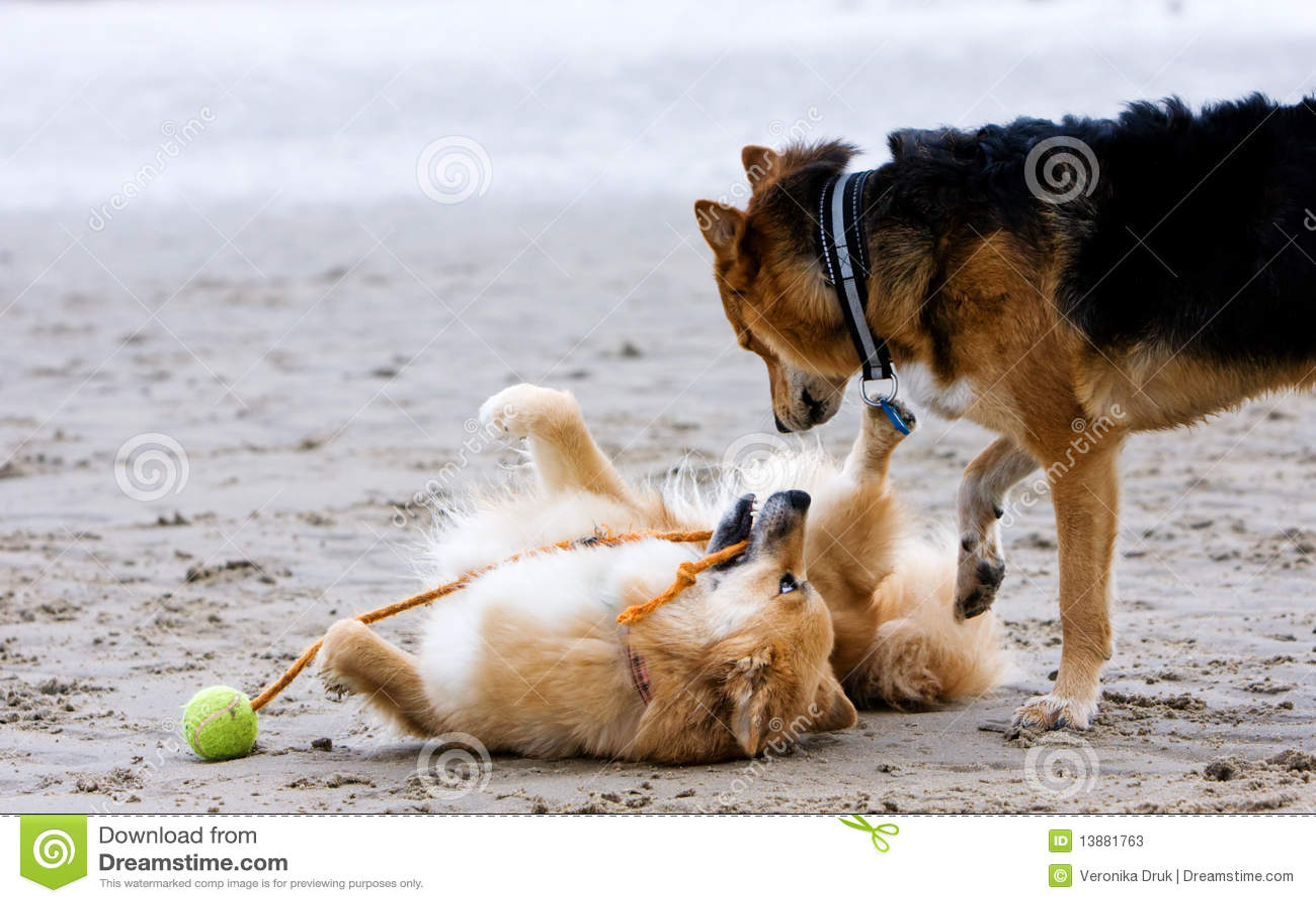 Plażowi psy