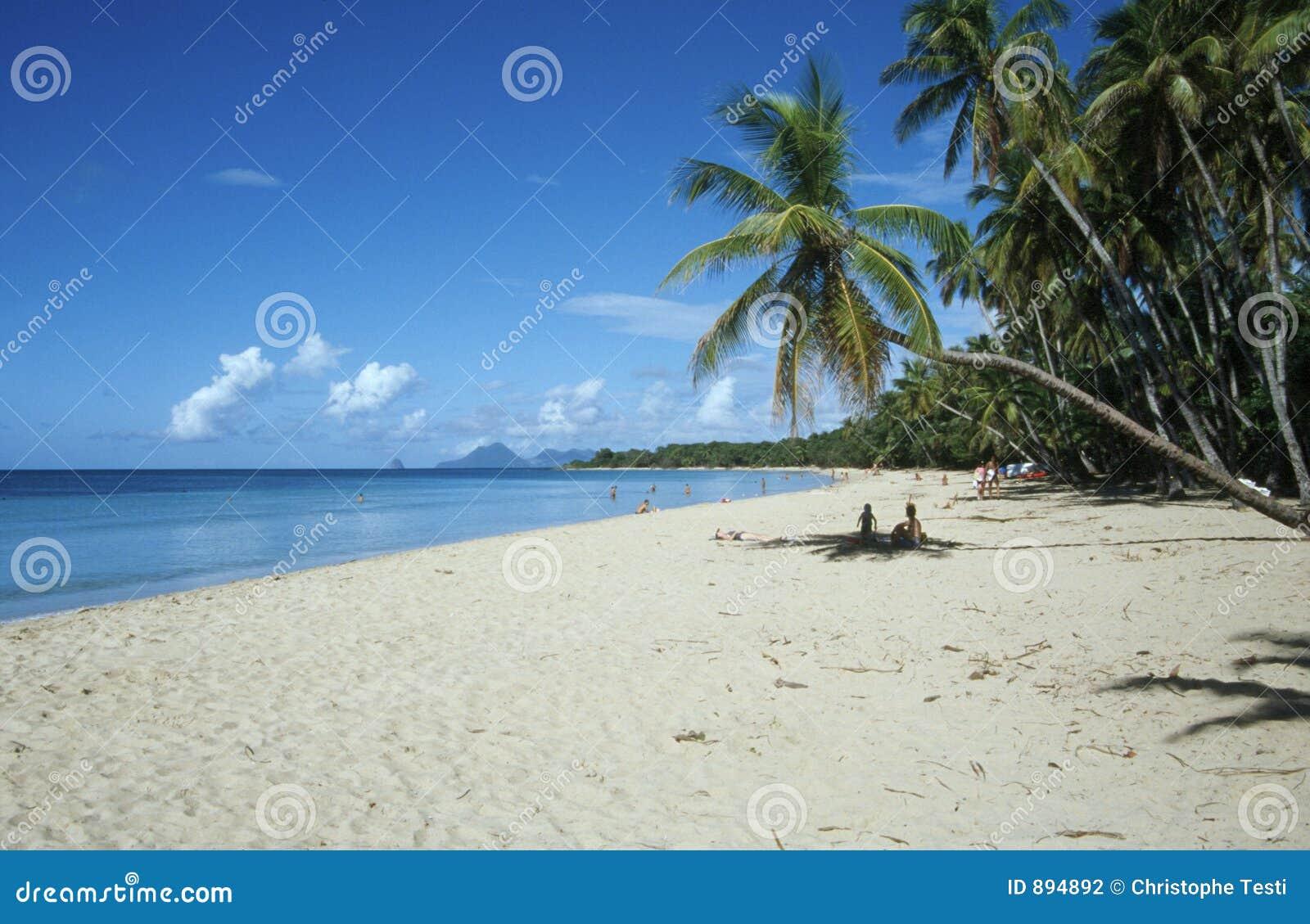 Plażowy carribean