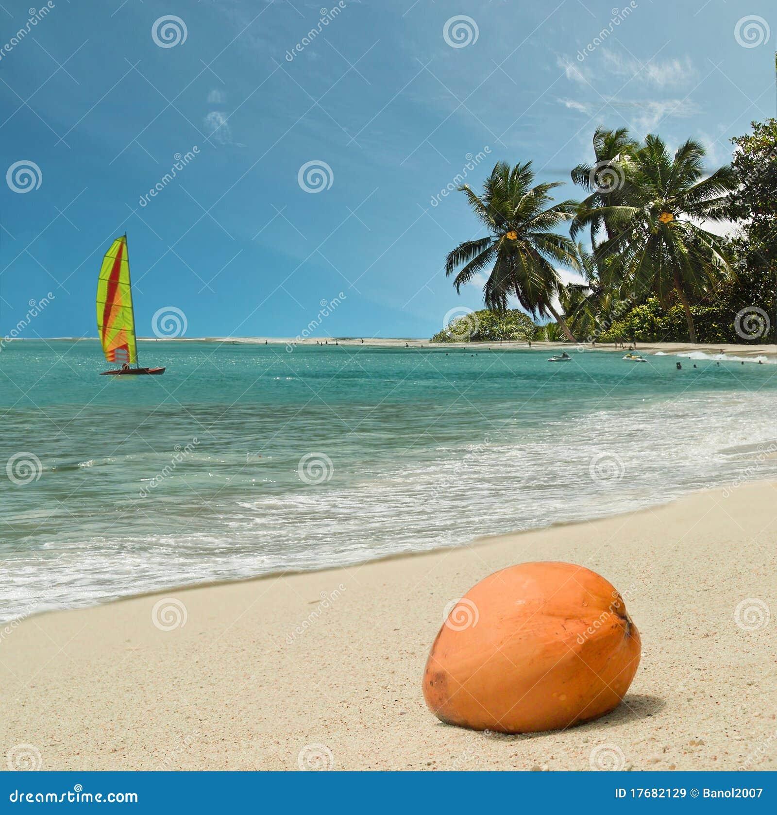 Plażowy kokosowy raj