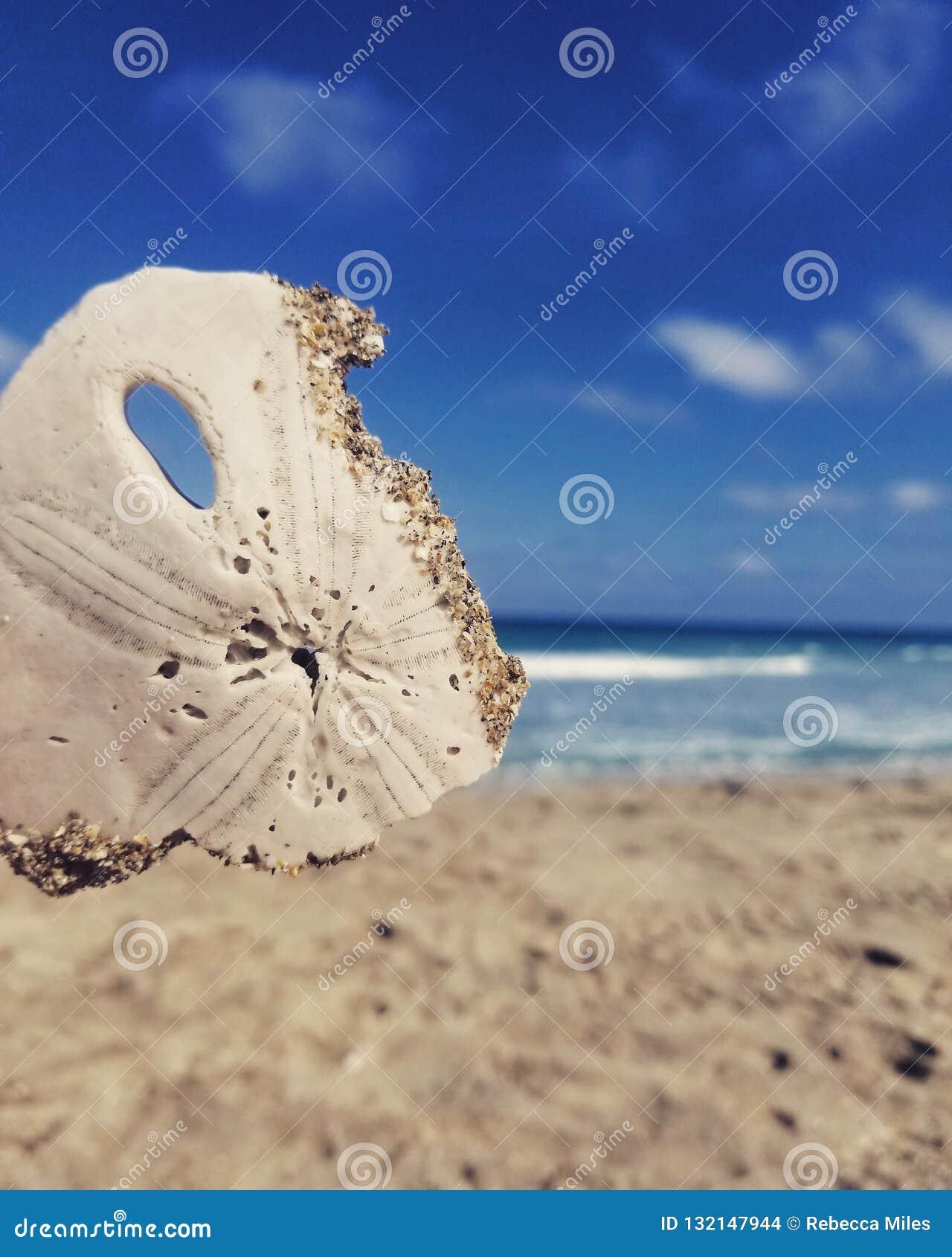 Plażowy złoto
