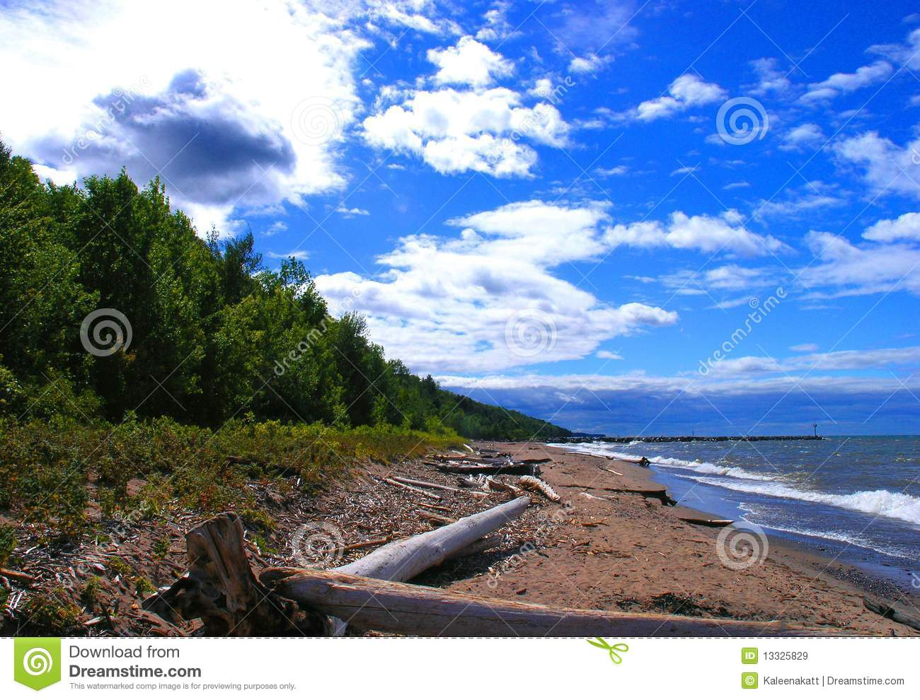 Plażowy driftwood