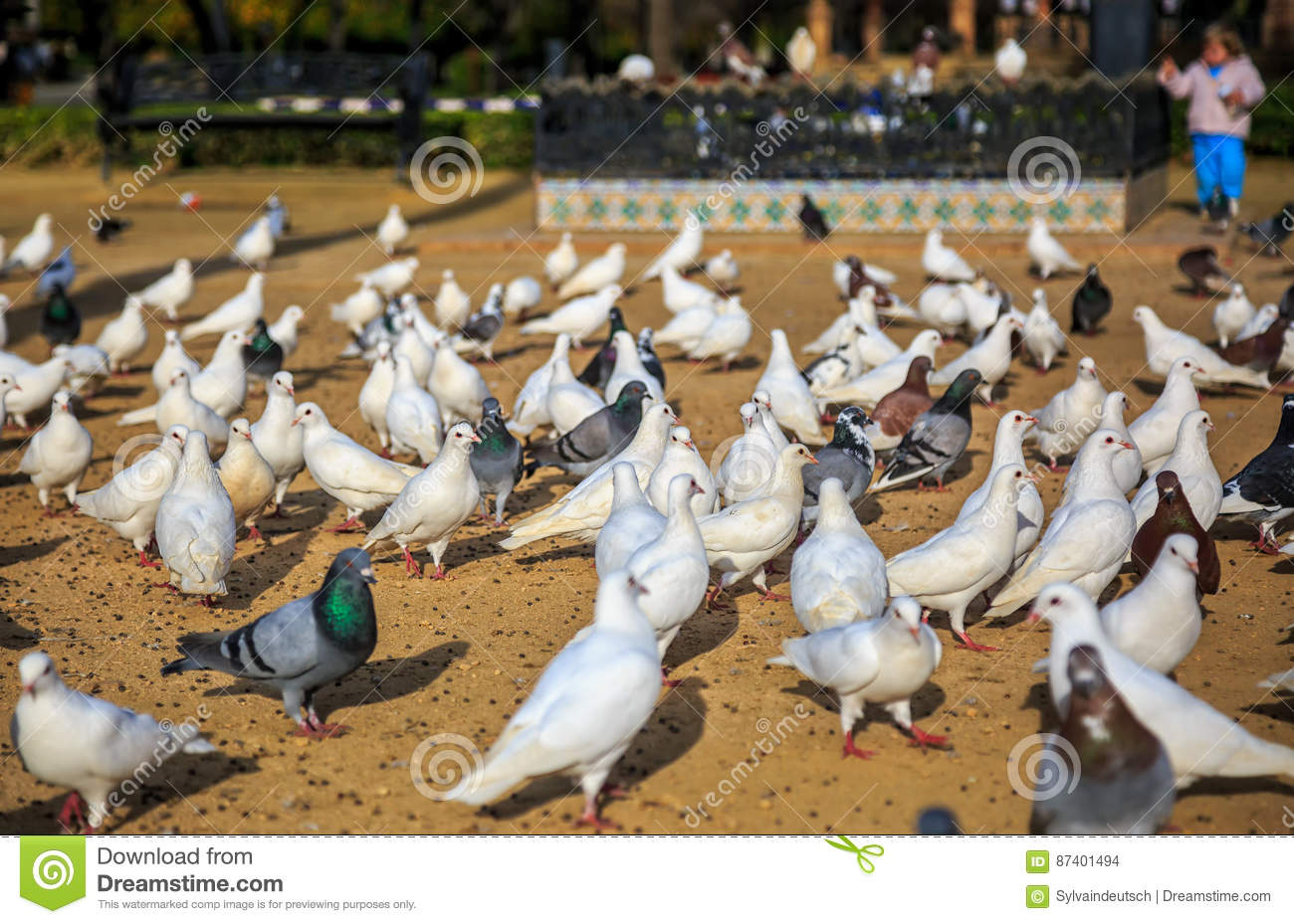 Place crowded of Birds