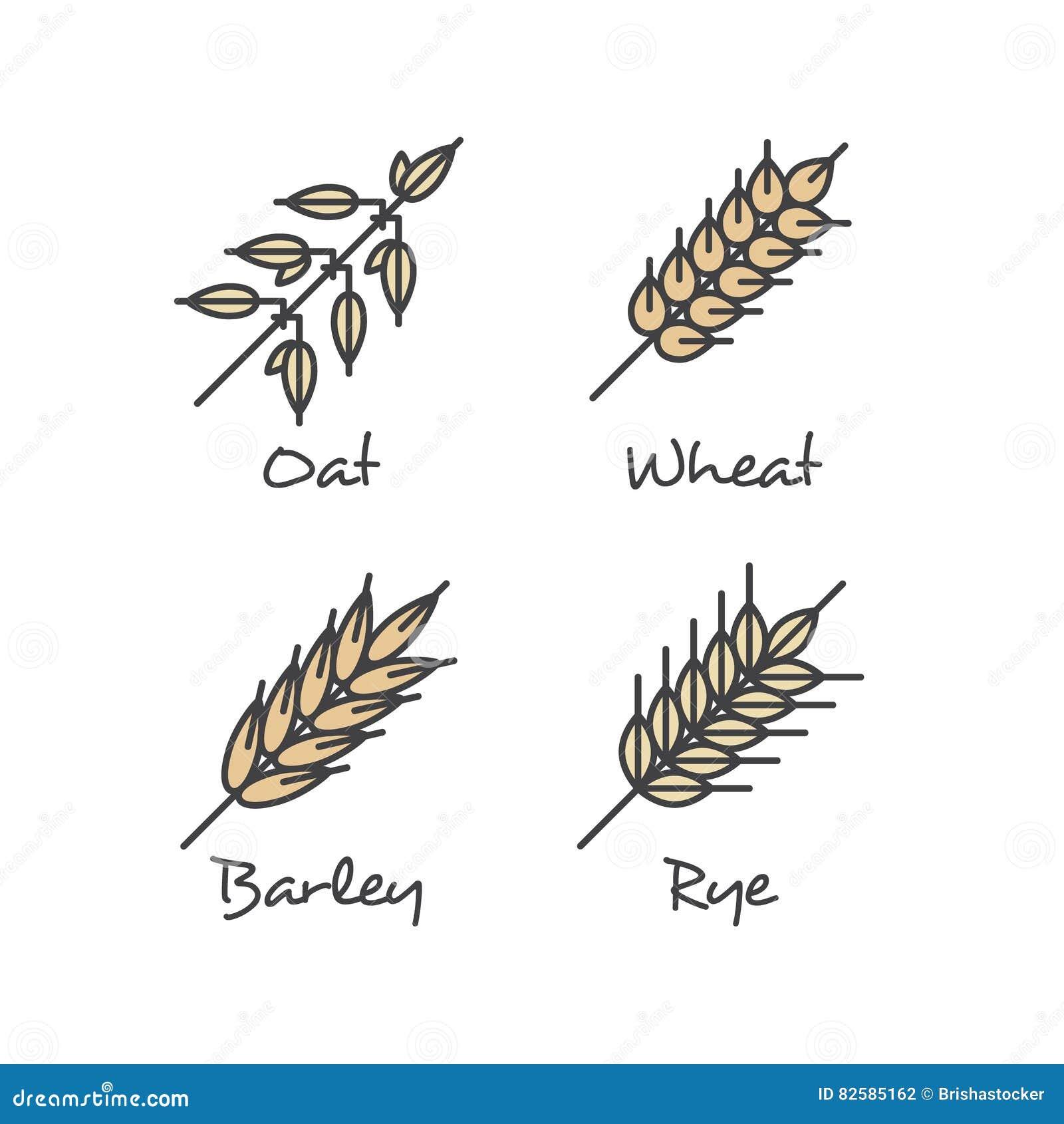 Placez avec les icônes simples de céréales de gruau : Le petit déjeuner sain de graines, de Rye, de blé et d orge d avoine dirige