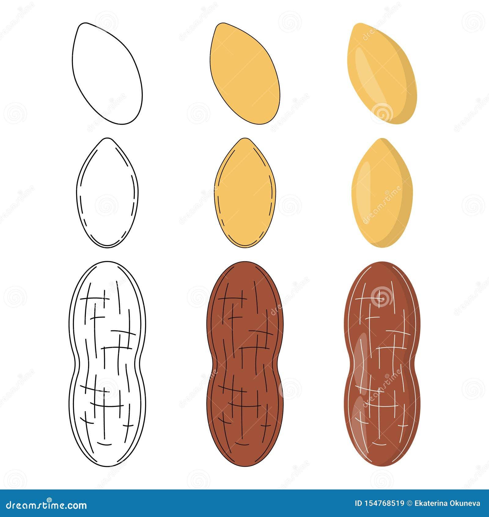Placez des arachides dans trois styles
