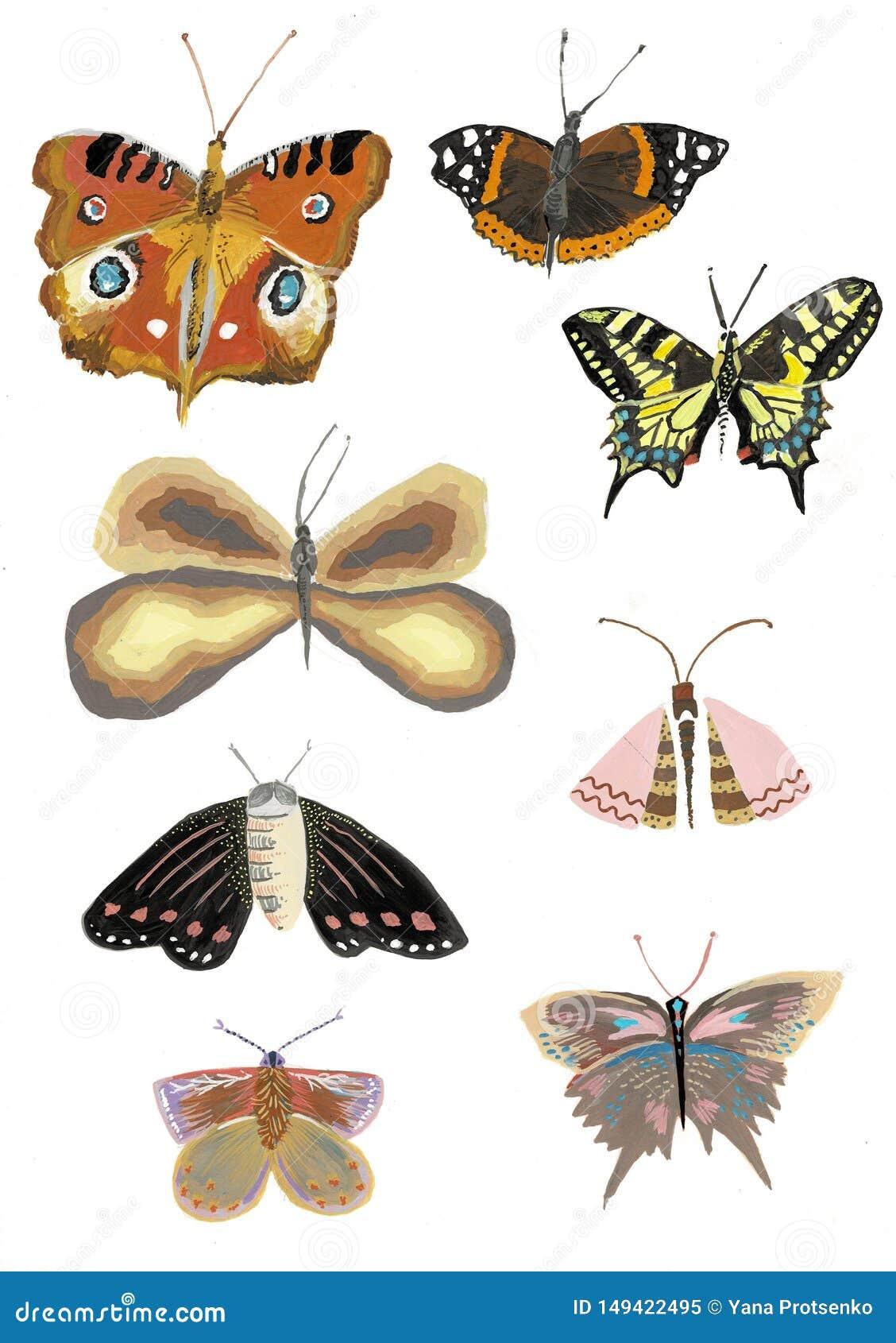 Placez des papillons color?s r?alistes, illustration d aquarelle de papillon
