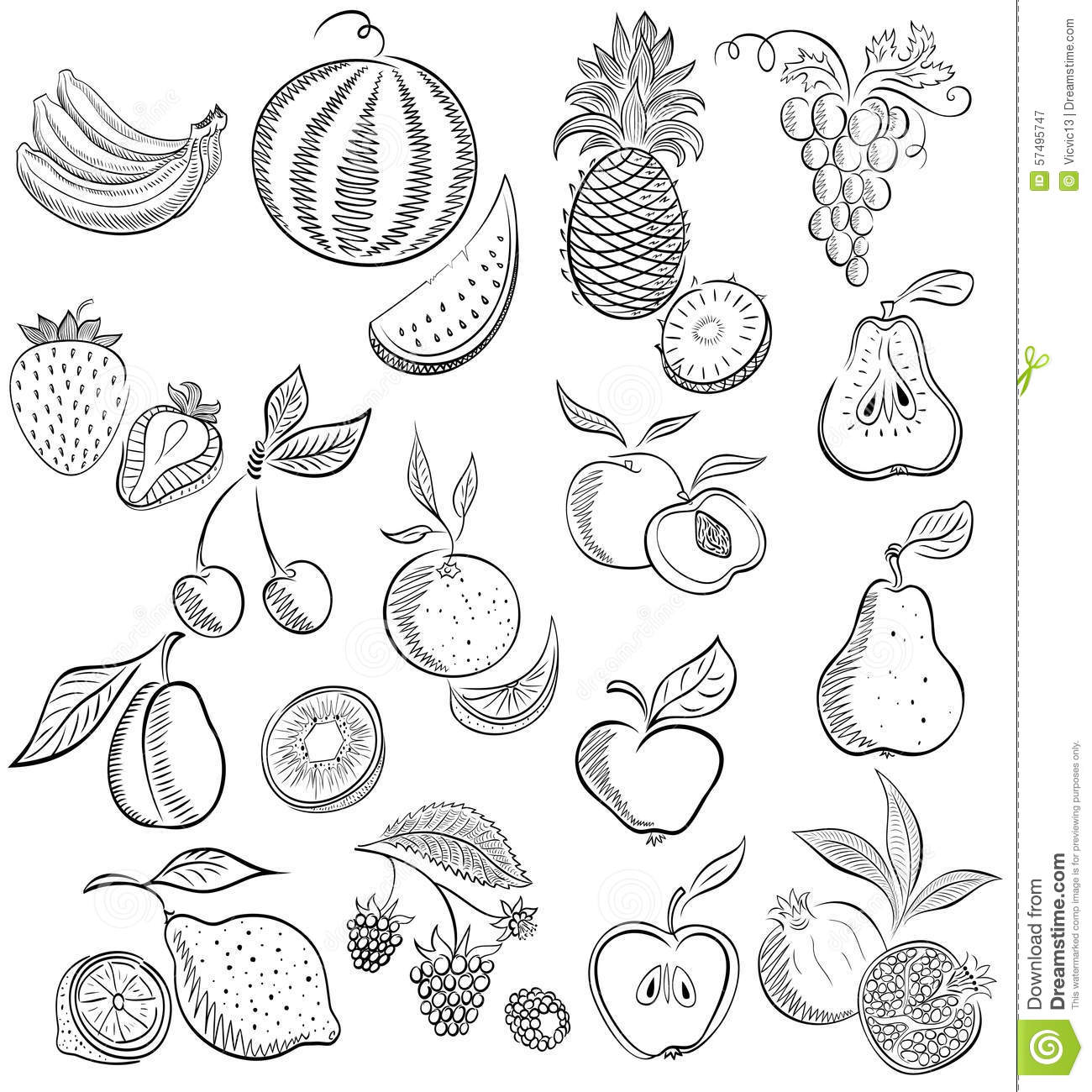Fruit Dessin placez du fruit et des baies croquis de dessin illustration de