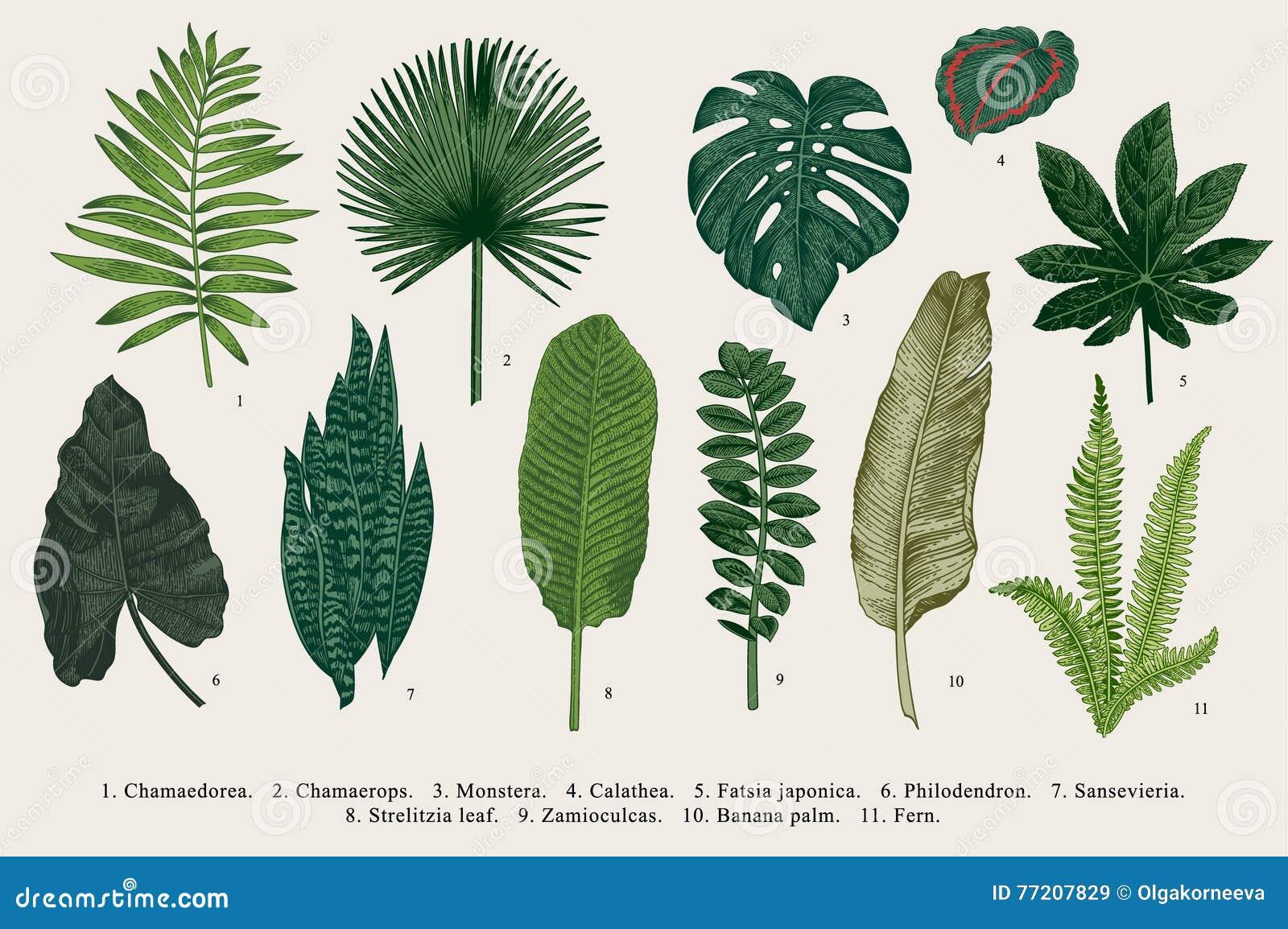 Placez la feuille exotics