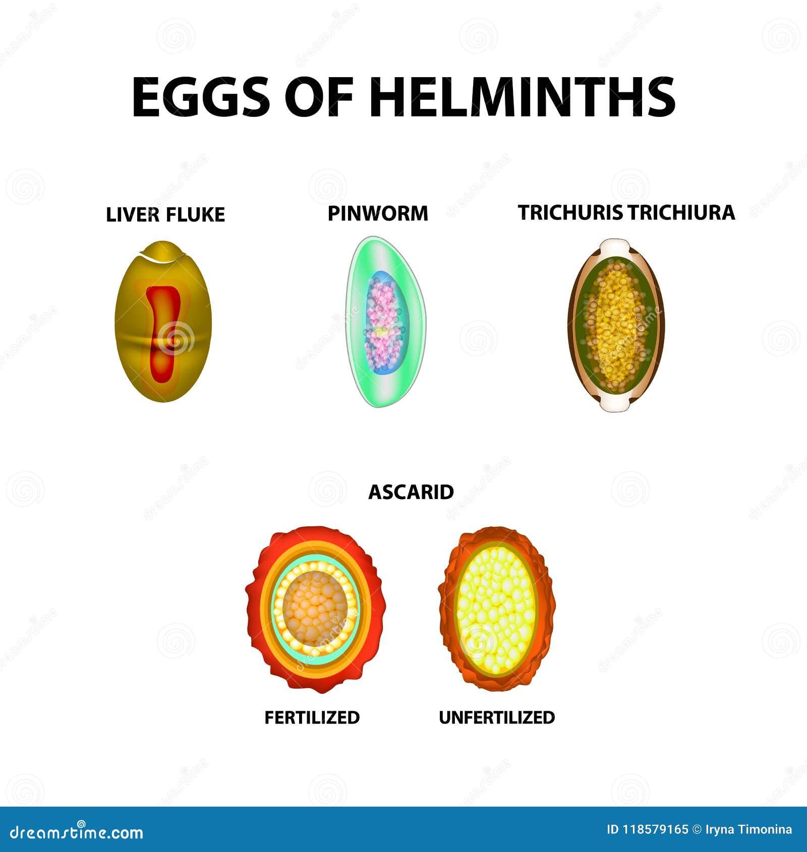 papilloma virus sui maschi papiloame pe corp cum se tratează
