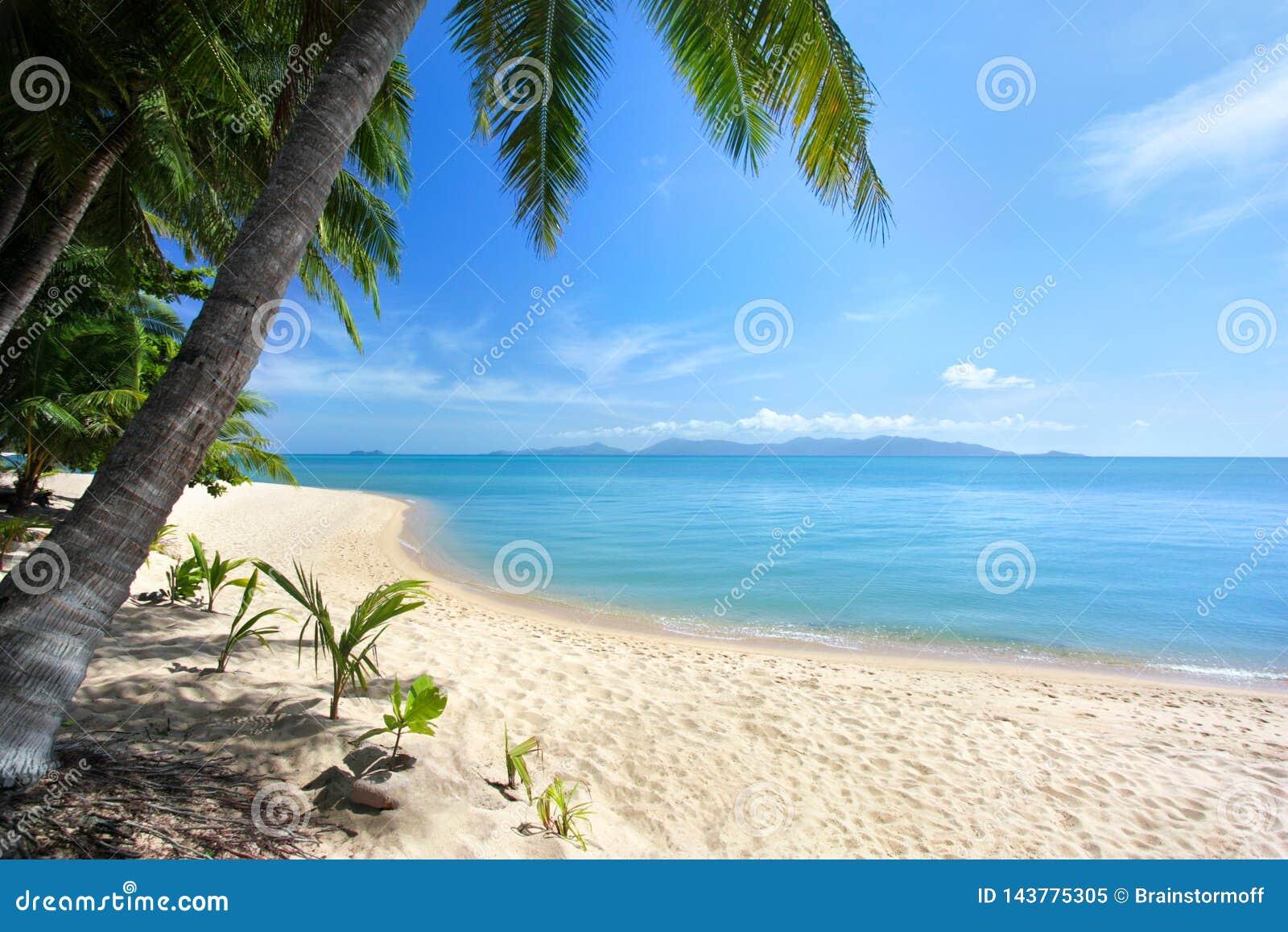 Plage blanche isolée de sable, palmiers verts, mer bleue, ciel ensoleillé lumineux, fond blanc de nuages