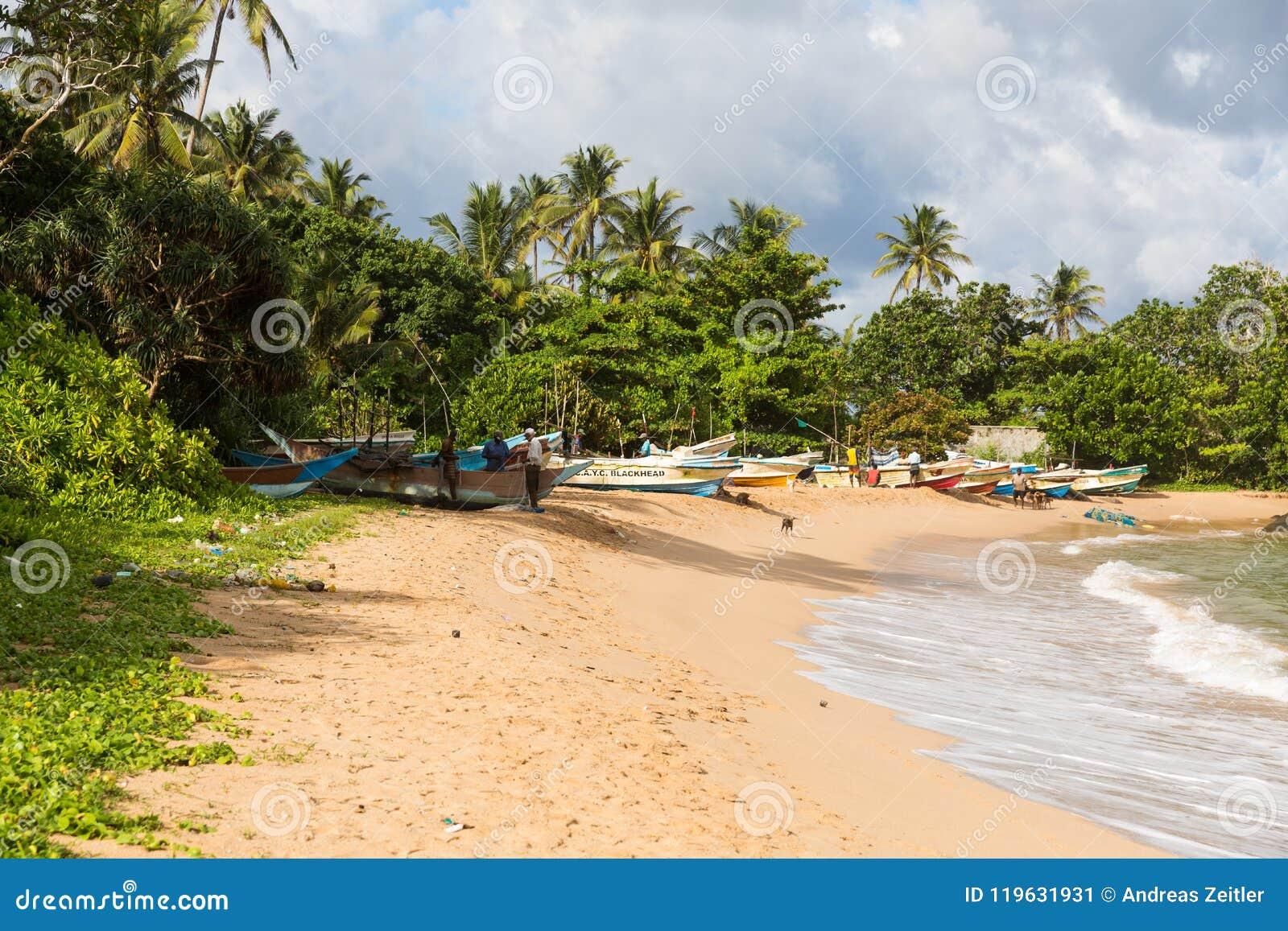 Plage de paradis de Sri Lanka avec le sable blanc, les palmiers et un coucher du soleil scénique