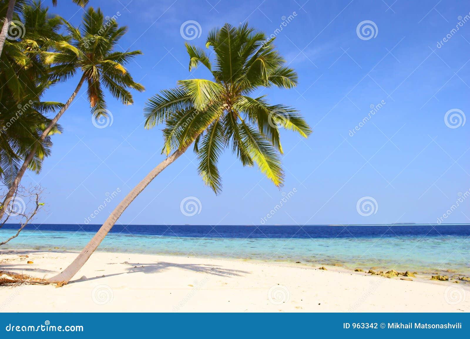 Plage gentille avec des palmiers photo stock image du plage pieds 963342 - Photos de toutes sortes de palmiers ...