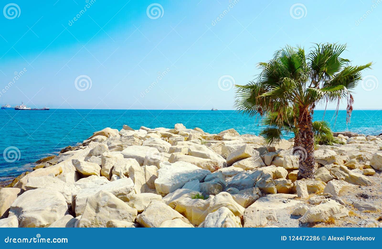 Plage rocheuse de mer avec un palmier isolé