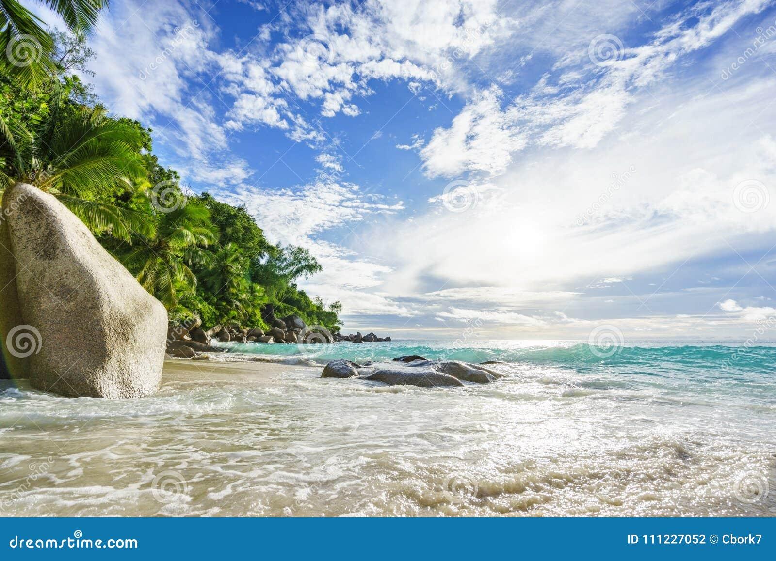 Plage tropicale de paradis avec des roches, des palmiers et le wate de turquoise