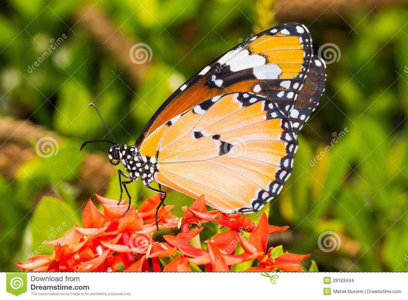 The concept of butterfly in the abdomen: what is it and what does it mean