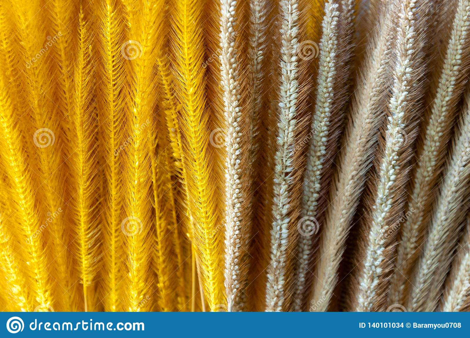 Plain and yellow color dyed of dry Pennisetum grass flower.