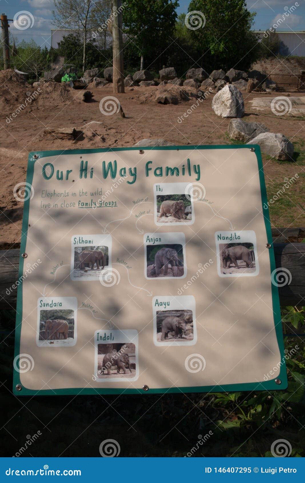 Plakat przedstawia słonia rodzinnego drzewa Chester zoo, UK