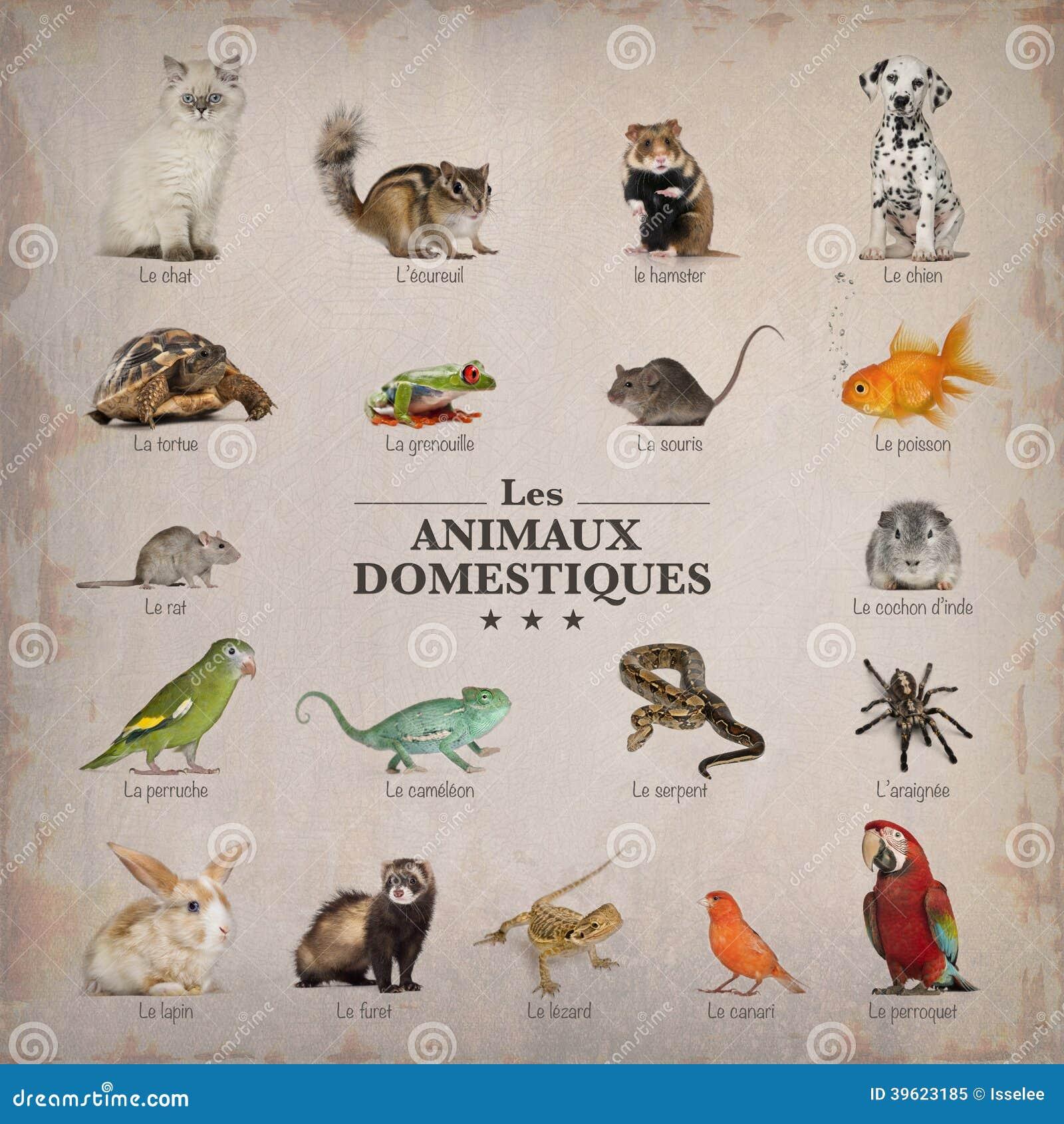 Plakat zwierzęta domowe w francuskim