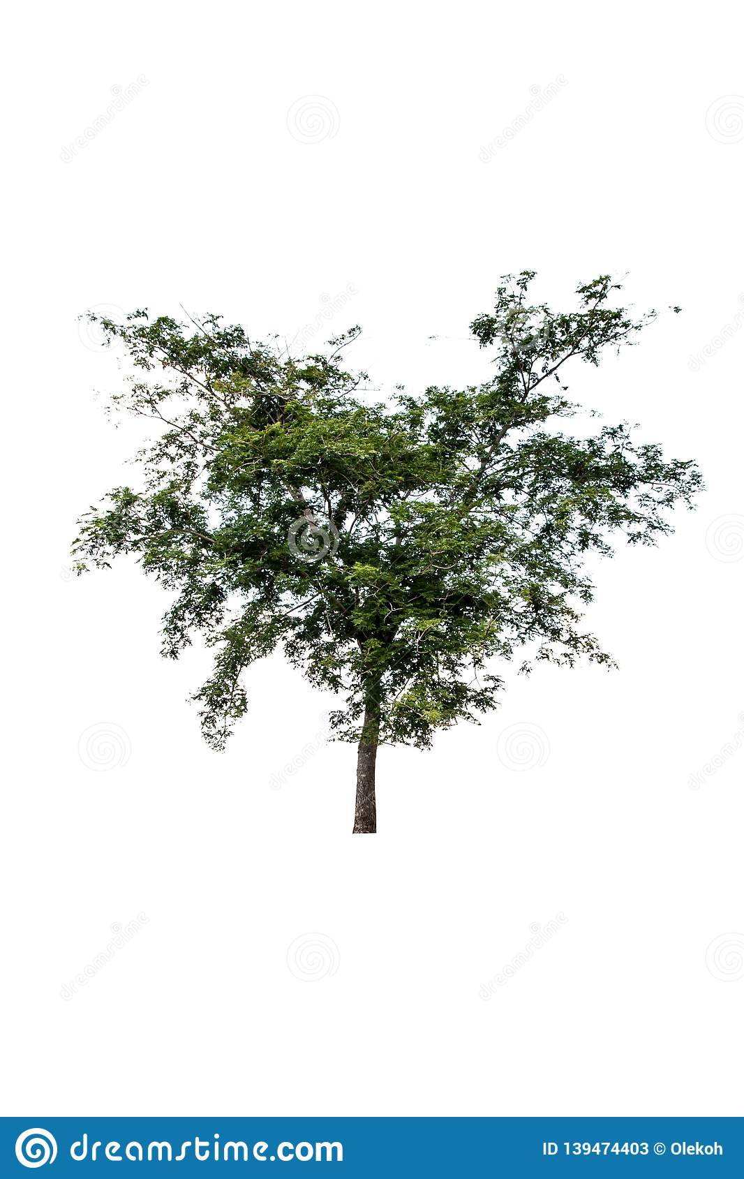 Plam tree on isolated background