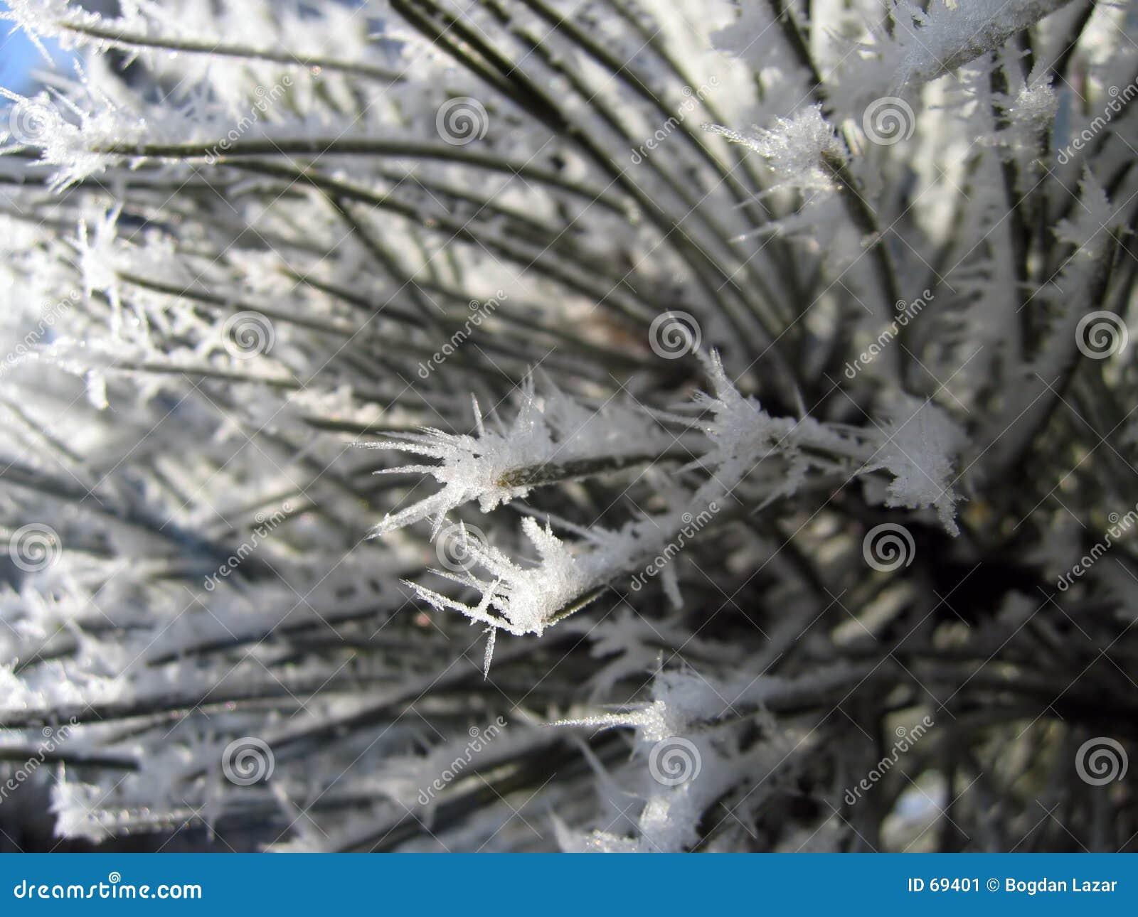 Plan rapproché 2 de fleur de l hiver