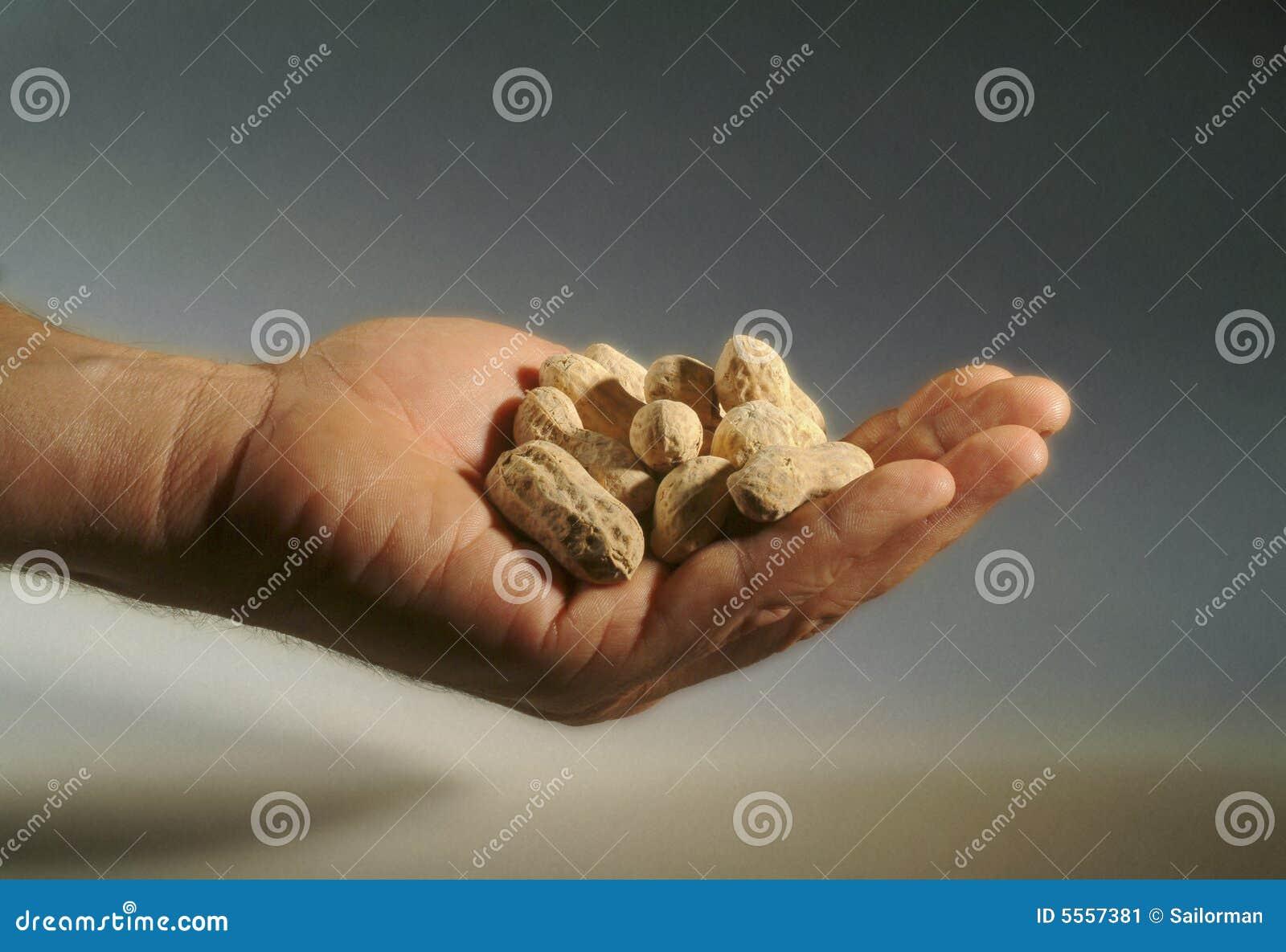 Plan rapproché d une main complètement des arachides