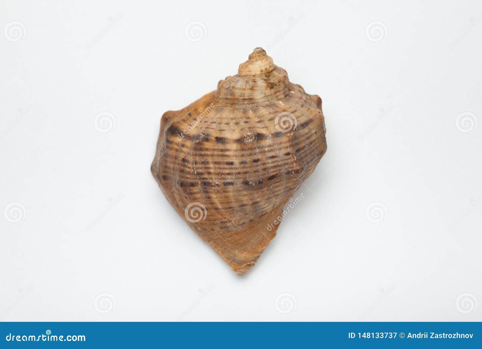 Plan rapproché de coquillage, concept de récréation marine