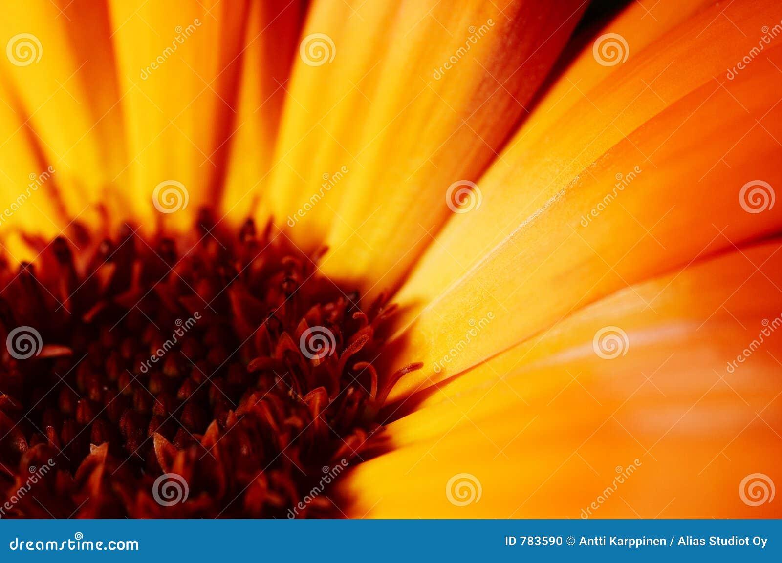 Plan rapproché de fleur
