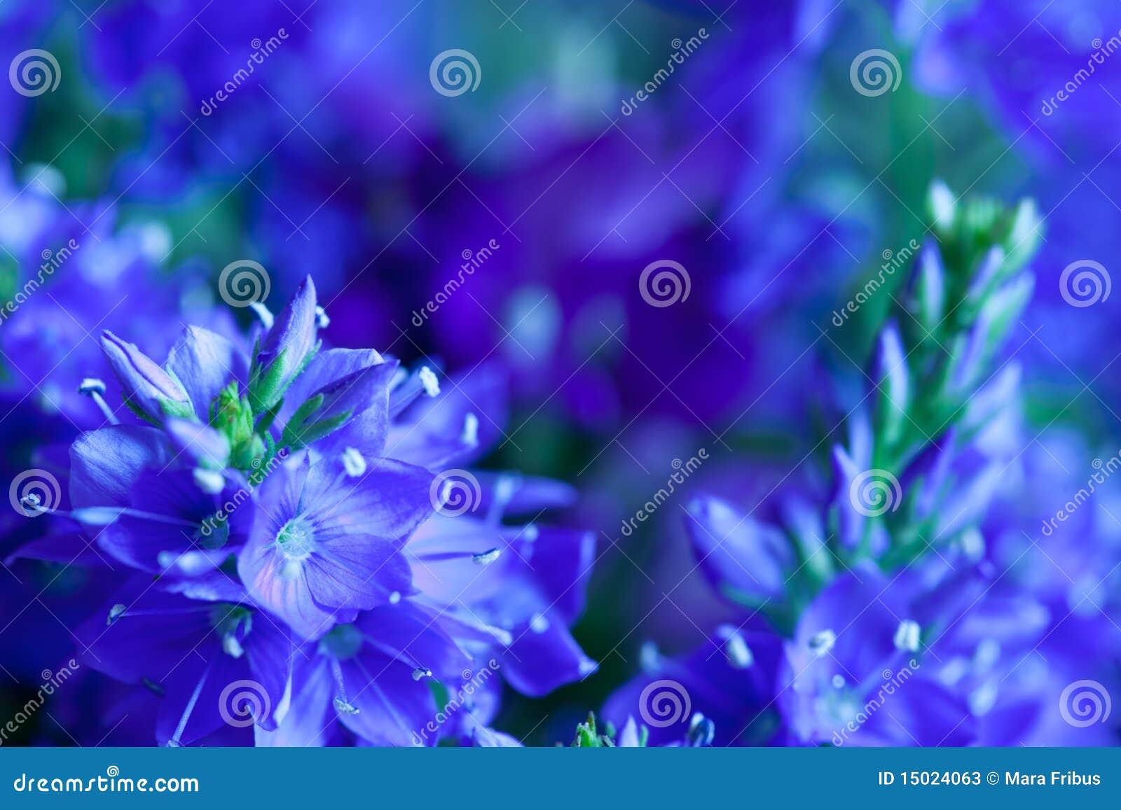 Plan rapproché de fleurs sauvages