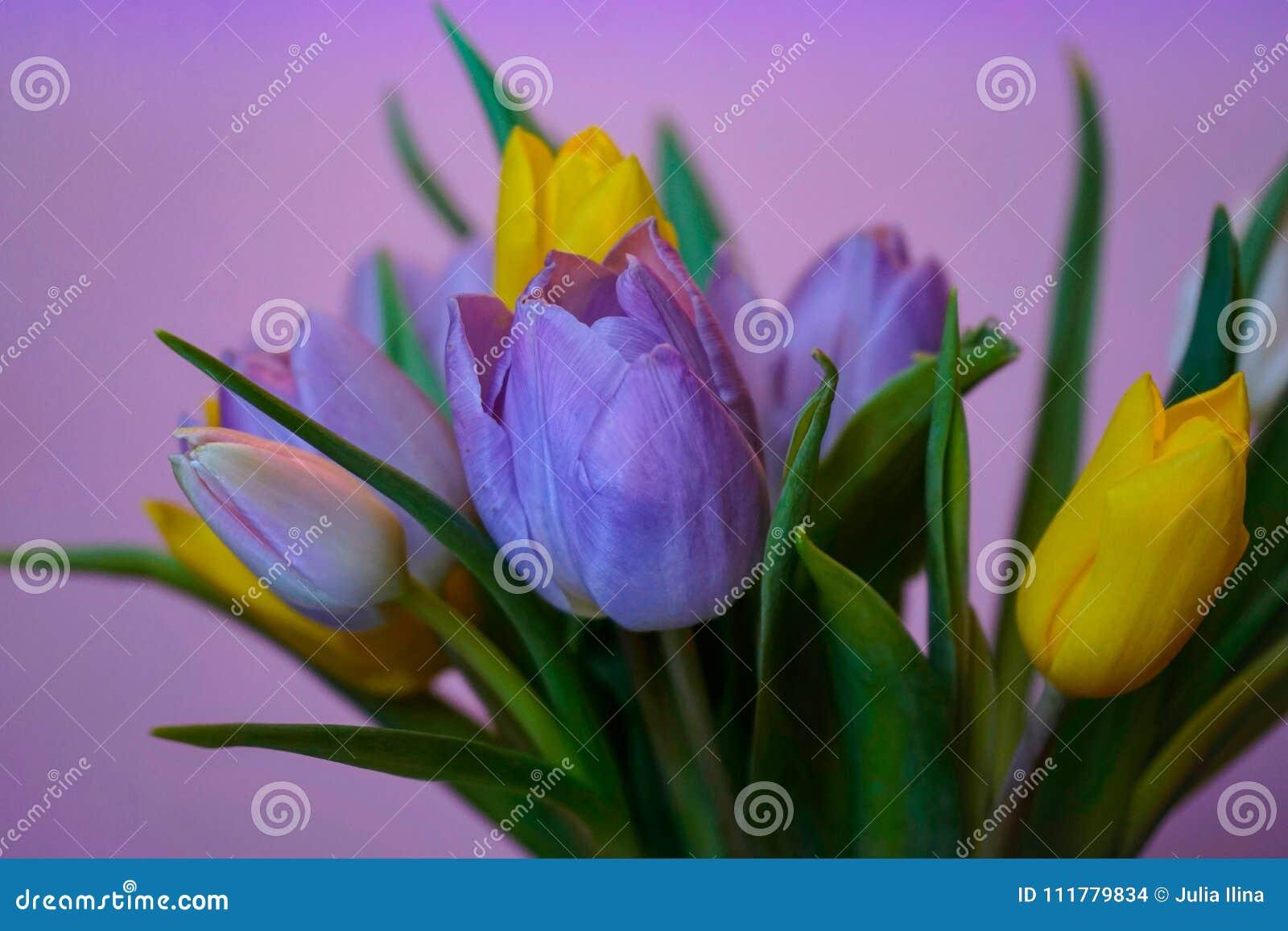 Plan rapproché de fond de rose de bouquet de fleurs de tulipes