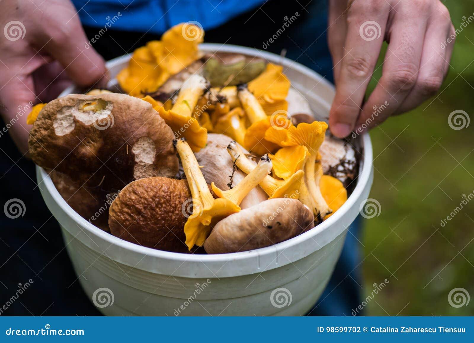 Plan rapproché de forager sur un seau complètement de champignons