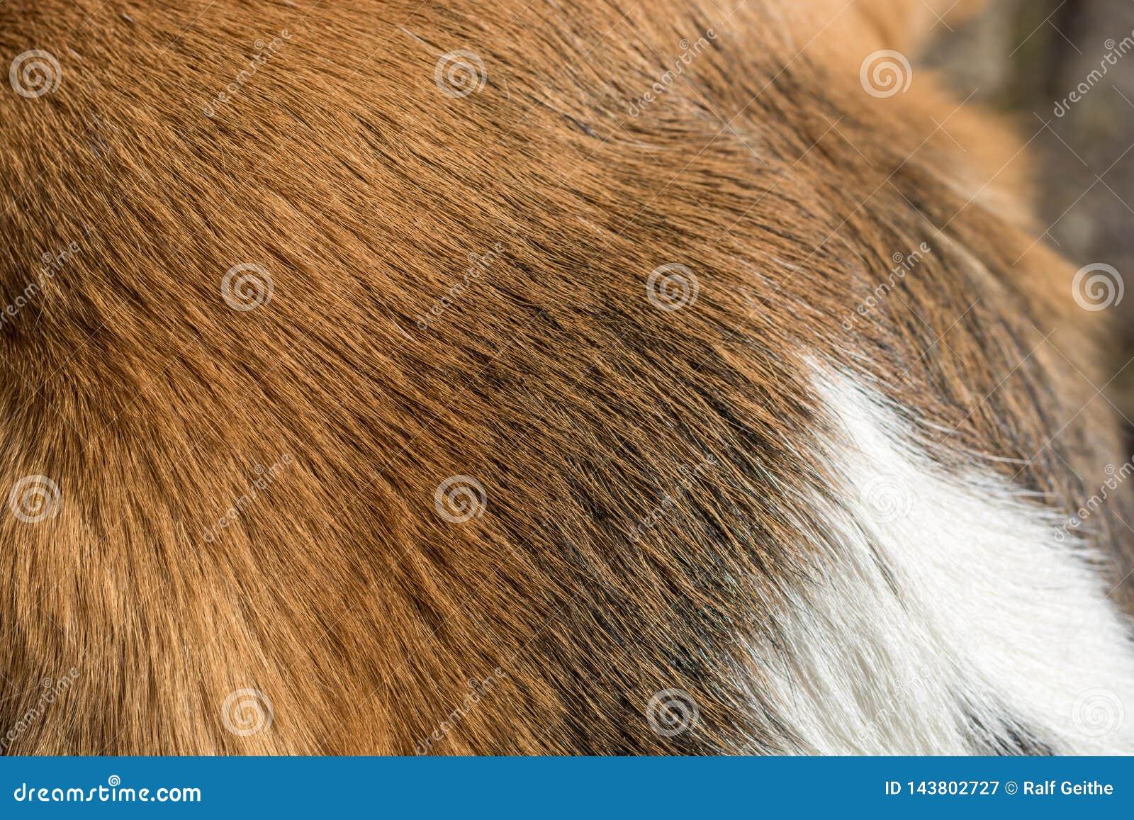 Plan rapproché de la fourrure d un briquet tricolore