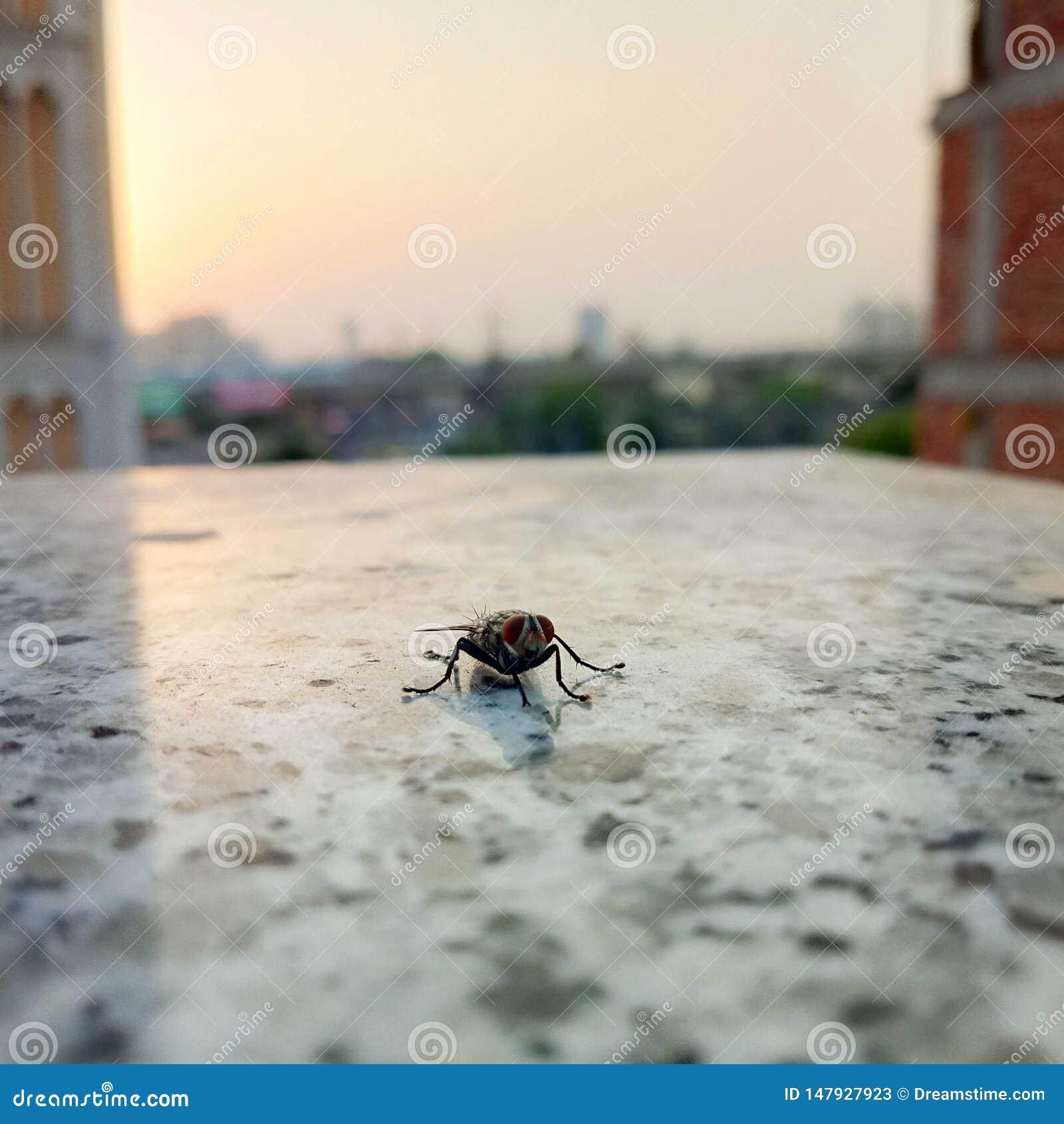 Plan rapproché de mouche à la fenêtre