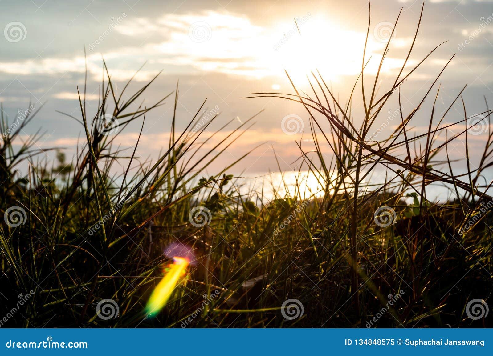 Plan rapproché de pré d herbe sur le fond de lumière du soleil