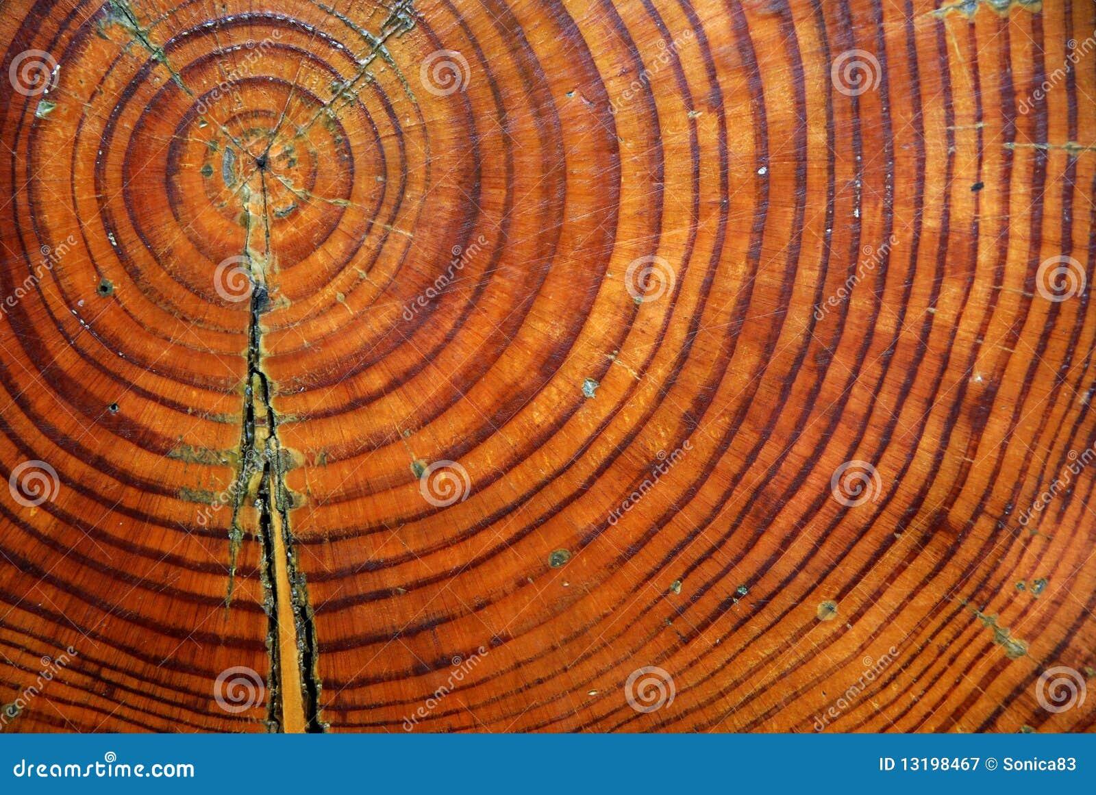 Plan rapproché de section de joncteur réseau d arbre