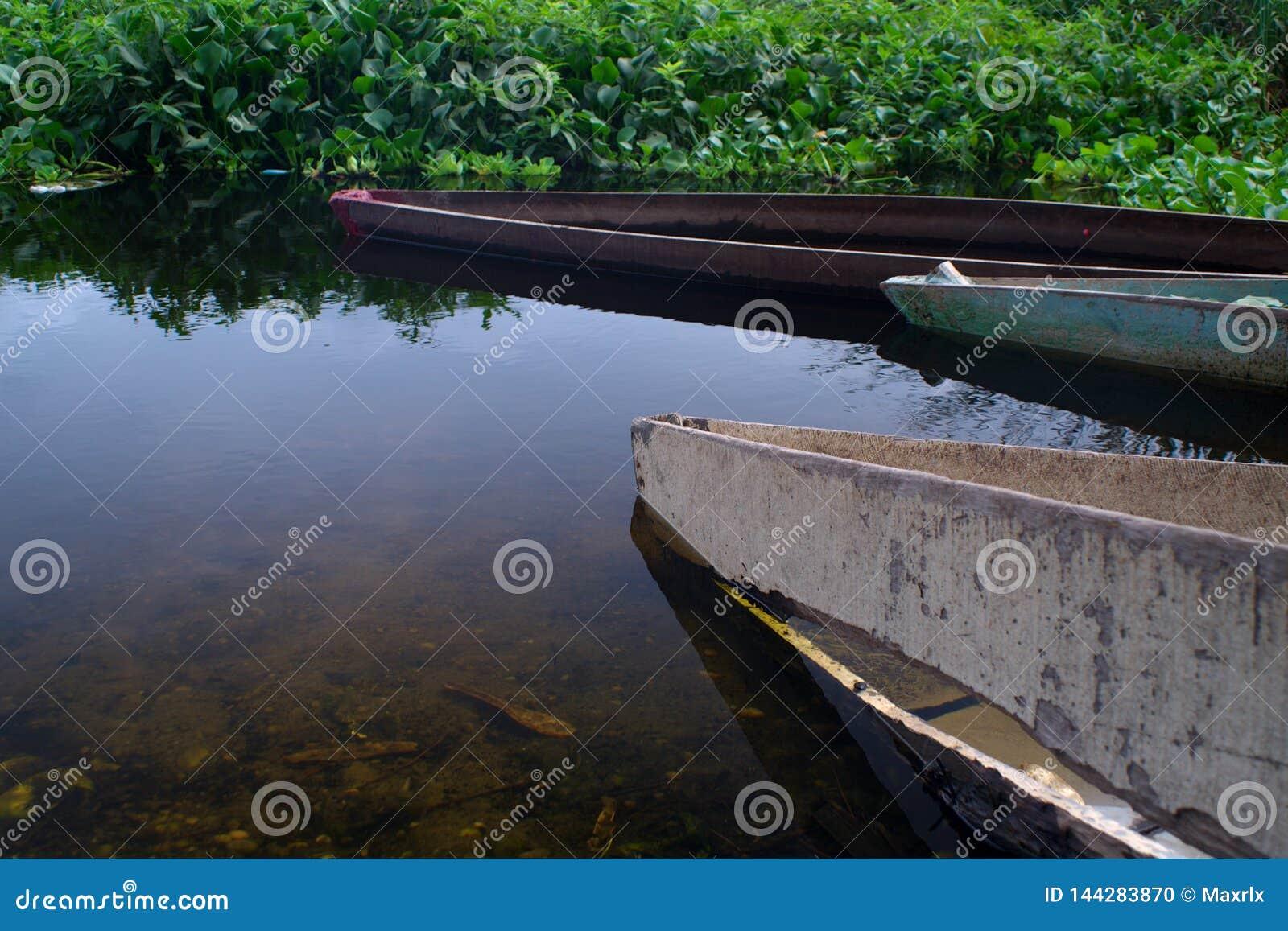Plan rapproché des canoës sur les banques de la lagune de Panguila