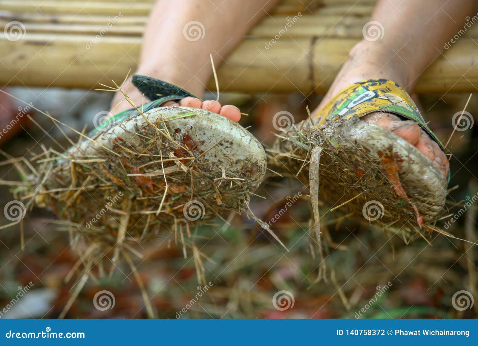 Plan rapproché des paires de sandales sales pleines de la boue et du foin portés par un garçon s asseyant sur un banc en bambou