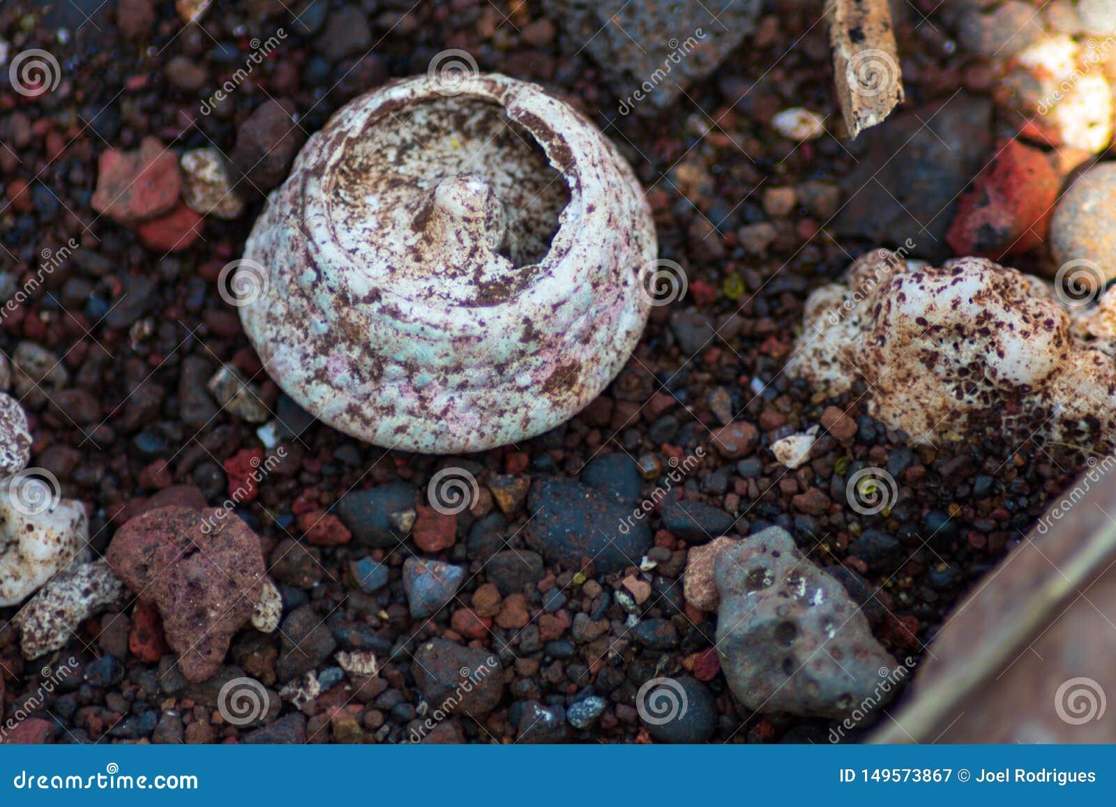 Plan rapproch? du fossile de corail sur la plage pierreuse